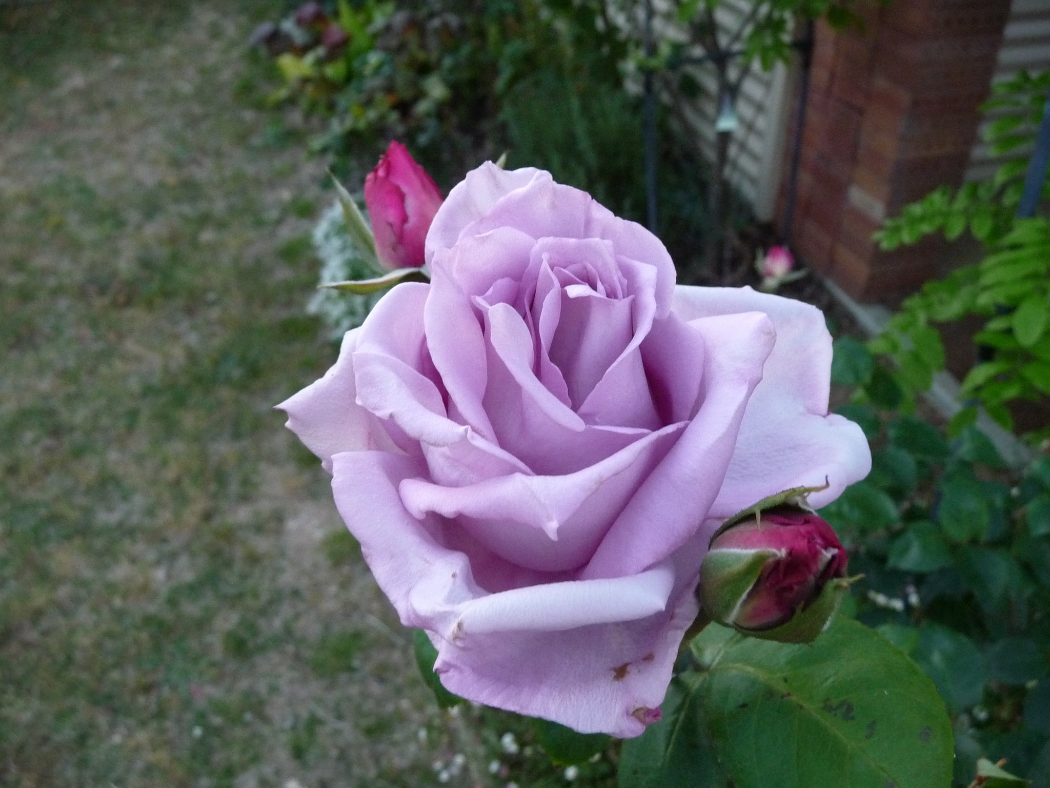 Rose Garden by Lucy E Richards