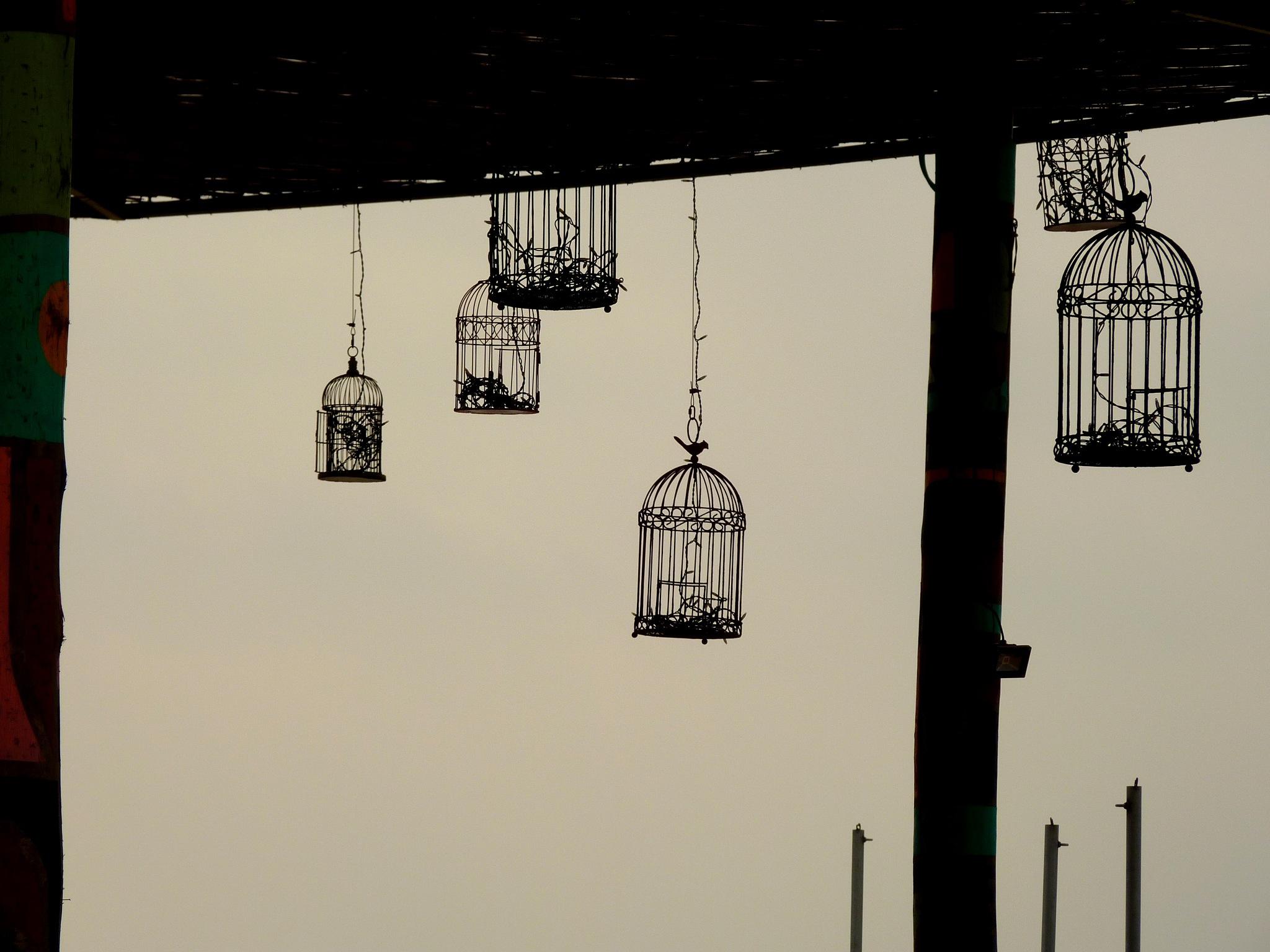 The birds flew 2 by Robert Julian