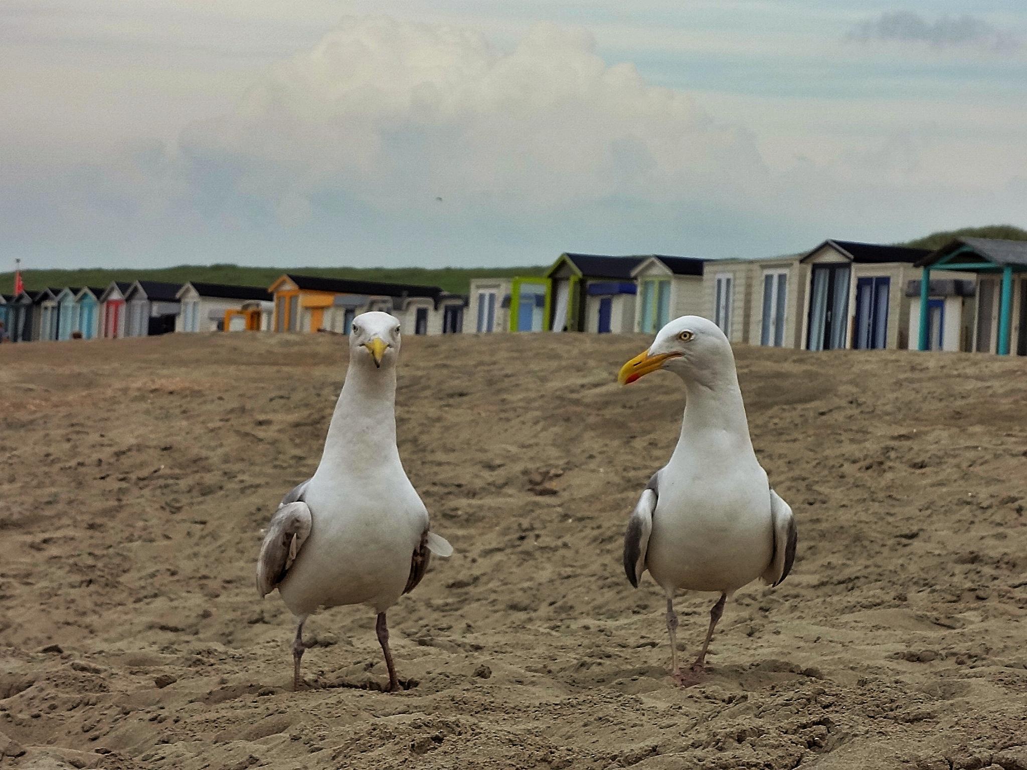Netherlands - Egmond aan Zee by NA