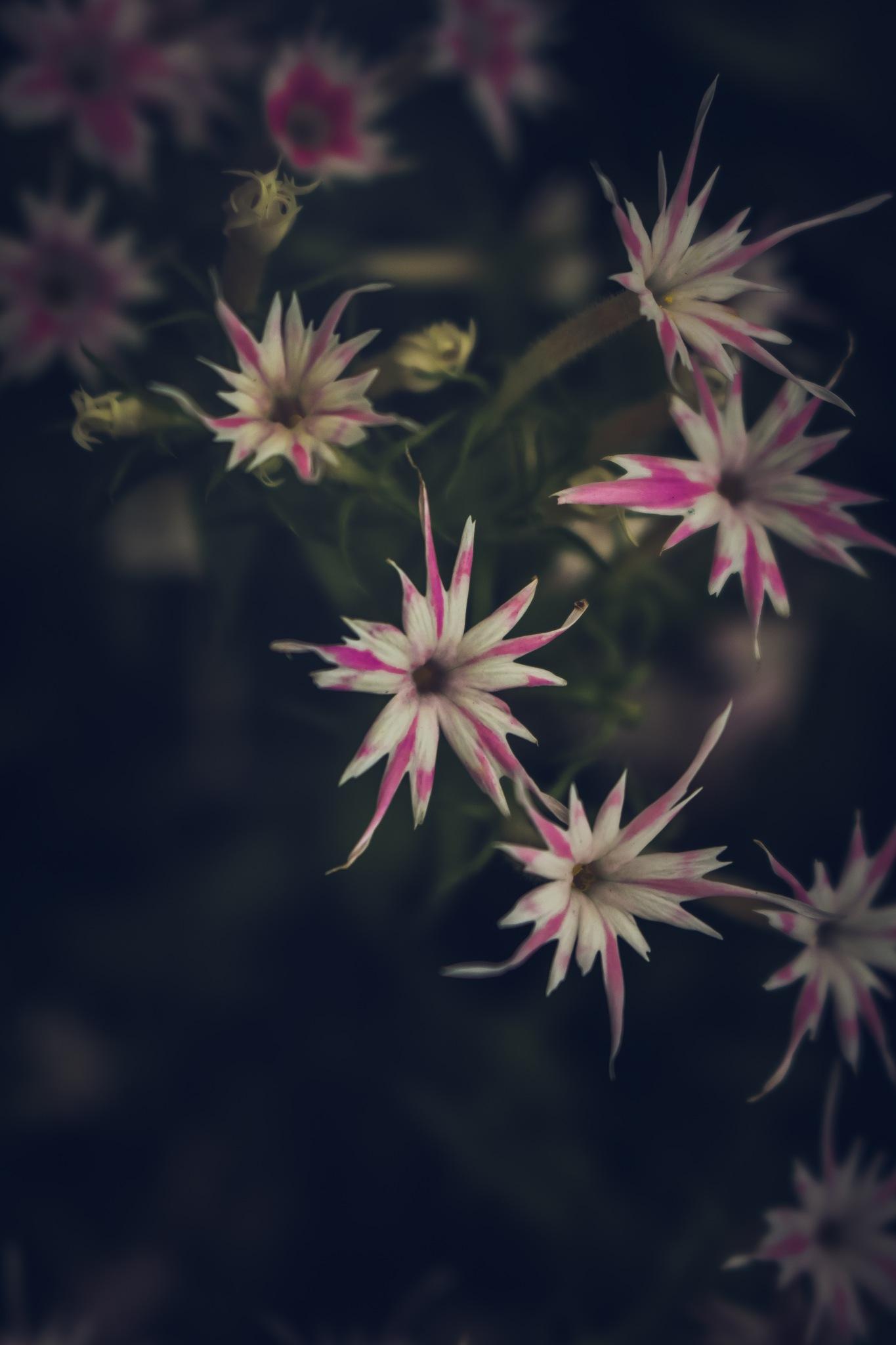 Flower by Annsmith
