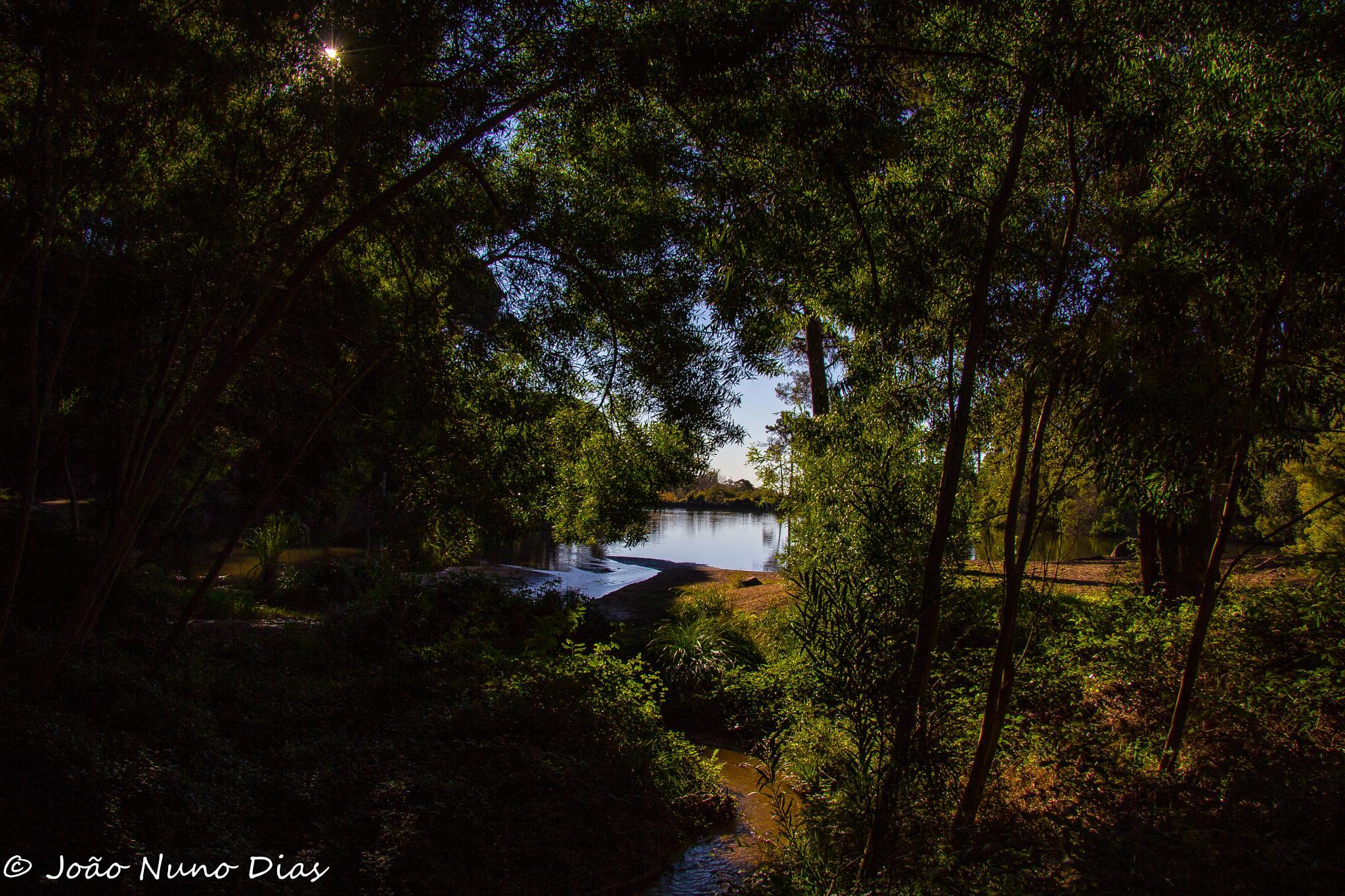 Into the bush by Nuno Dias