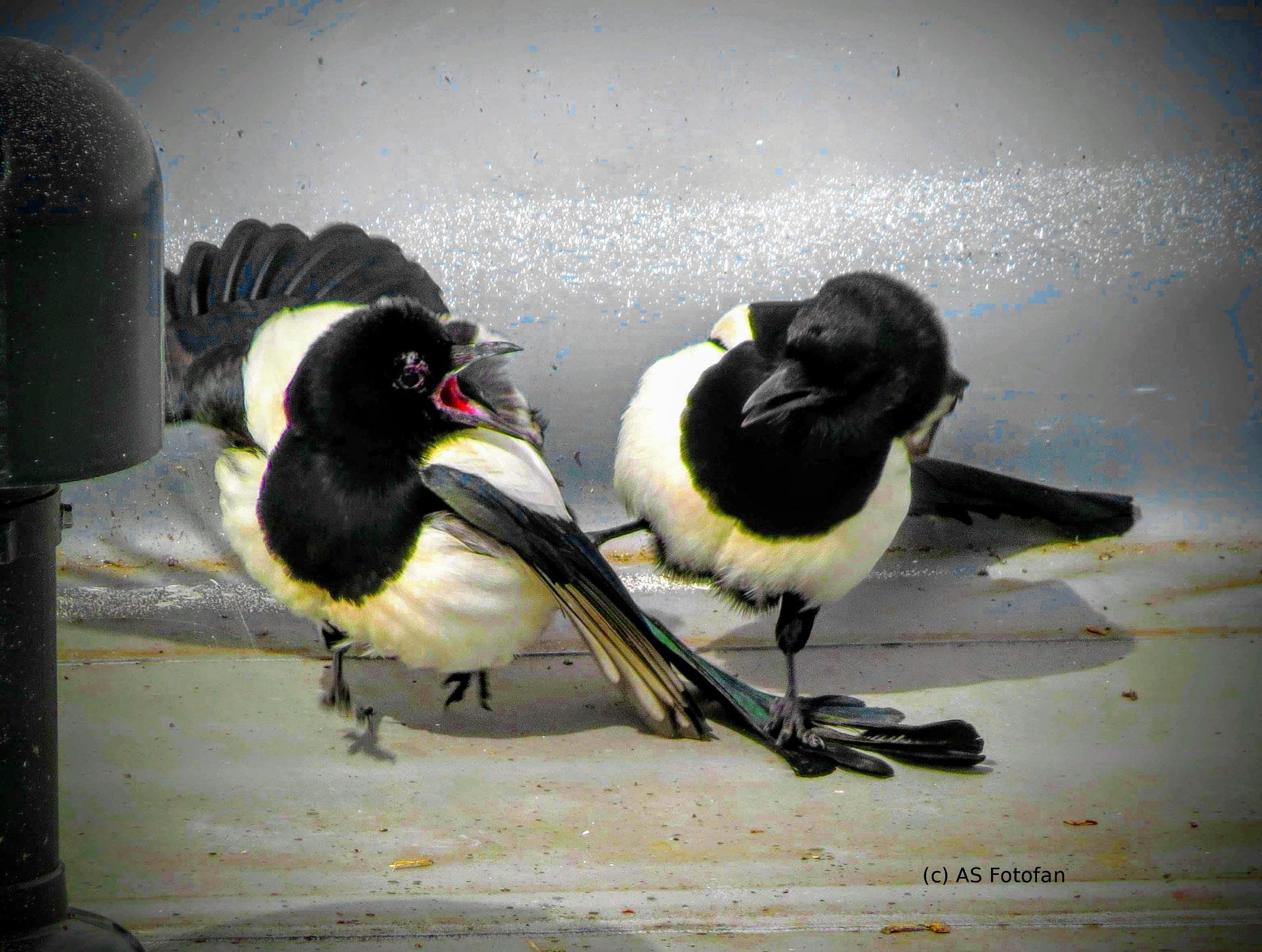 Aua du stehst auf meinen Flügel :o)) by axelstein