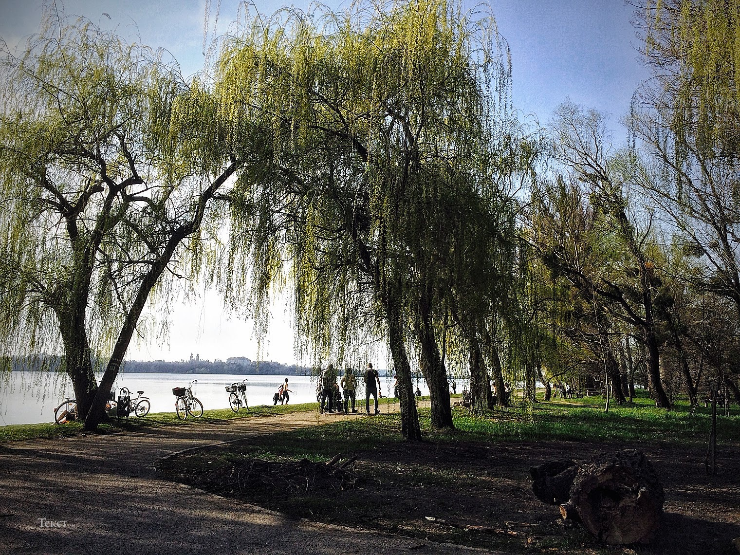people, bikes, willow by Mitalier