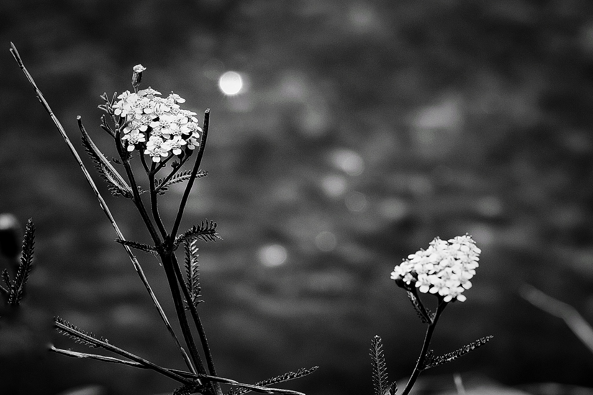 Untitled by Mitalier