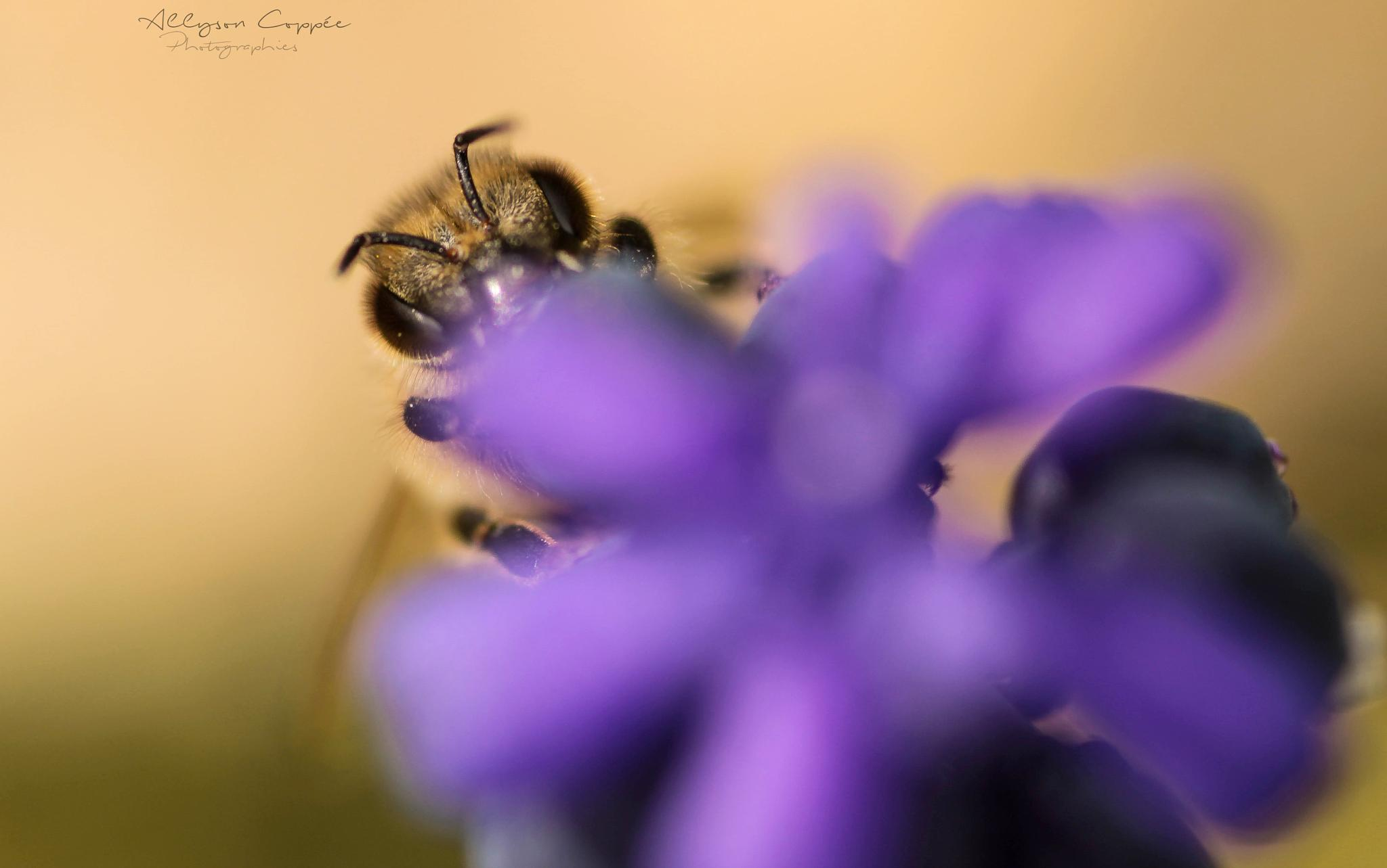 Bee by Allyson Coppée Photographies