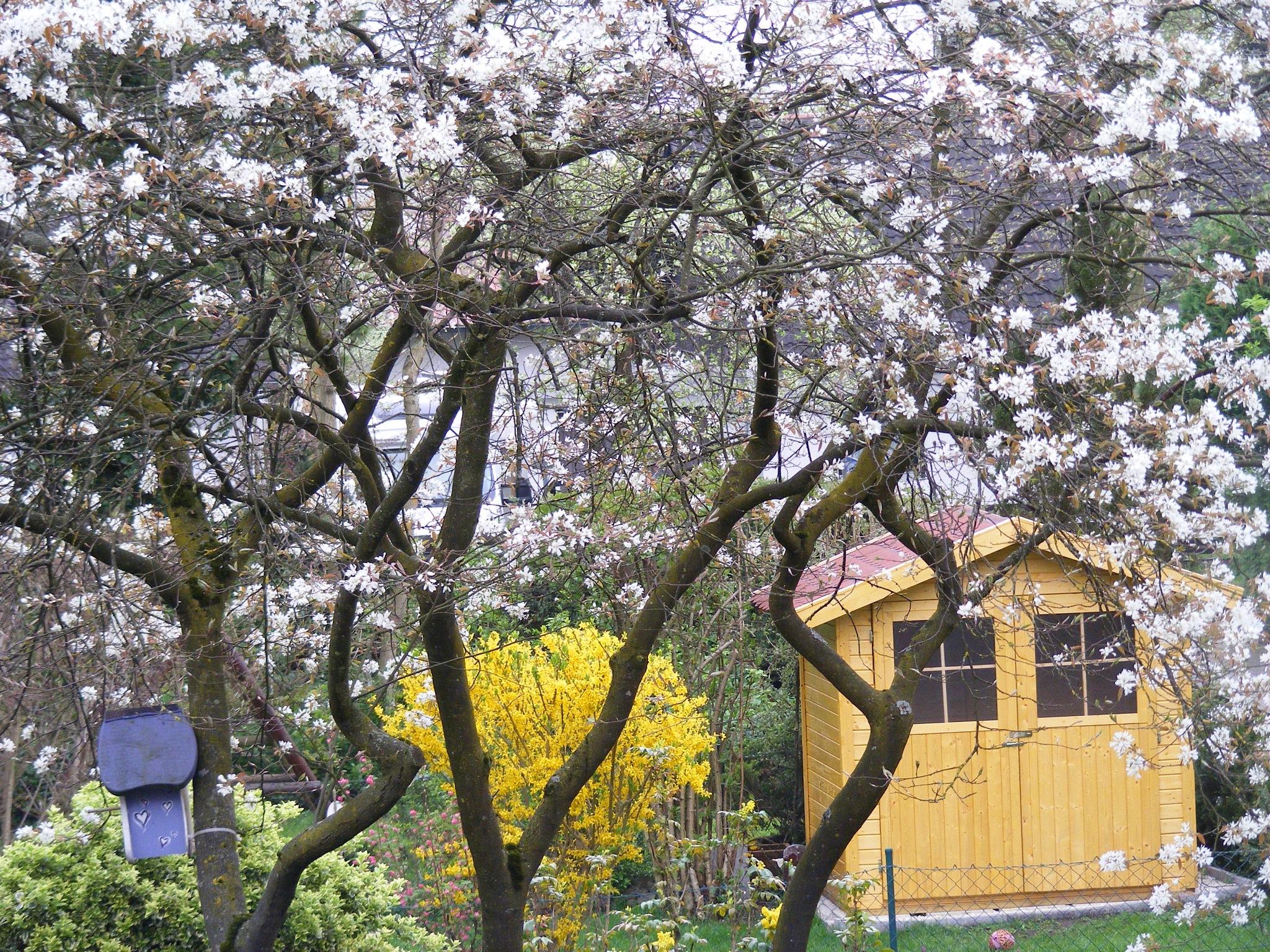 Frühling by swernthaler