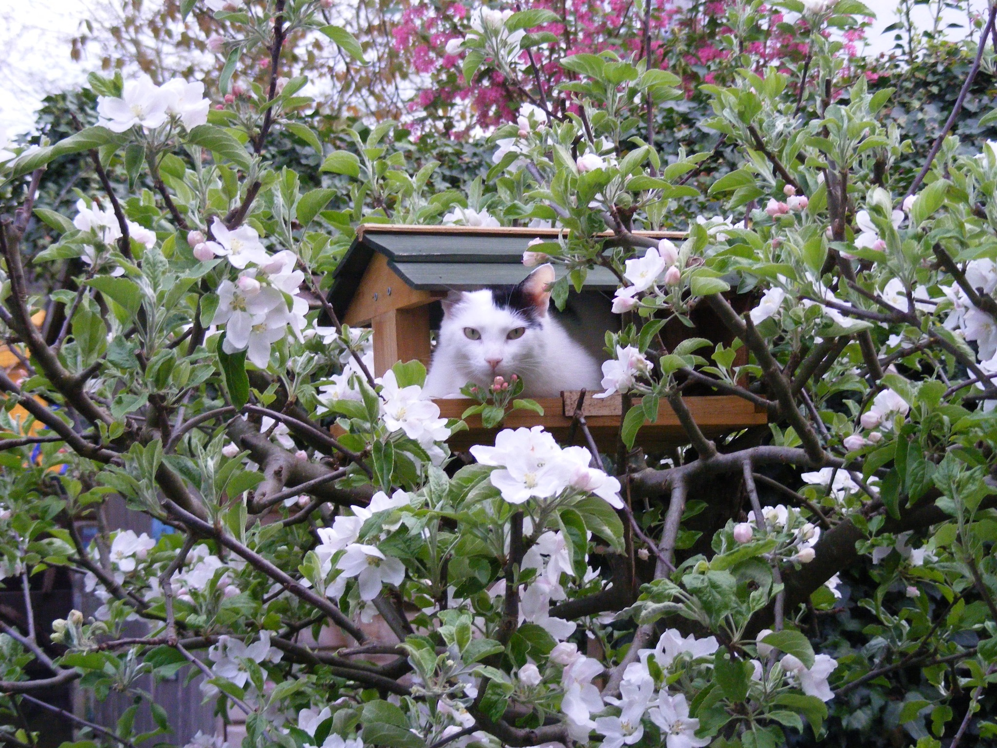 Camilla e la Primavera by swernthaler