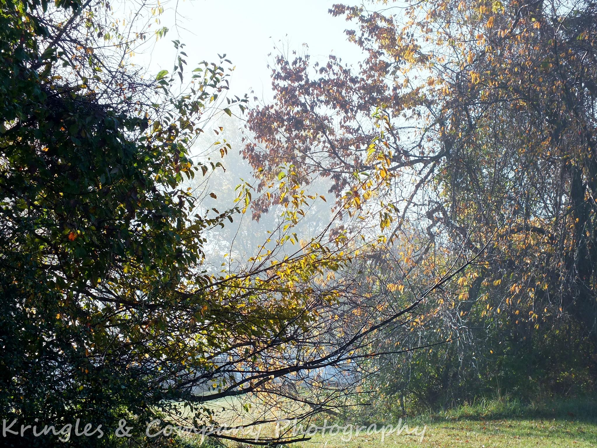 Foggy Morn  by don.wormsley