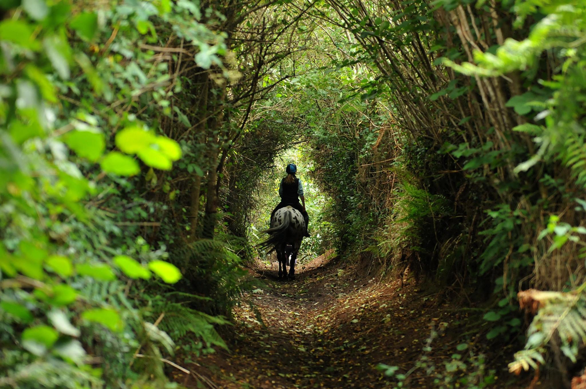 Devon lane by Paul.Taylor
