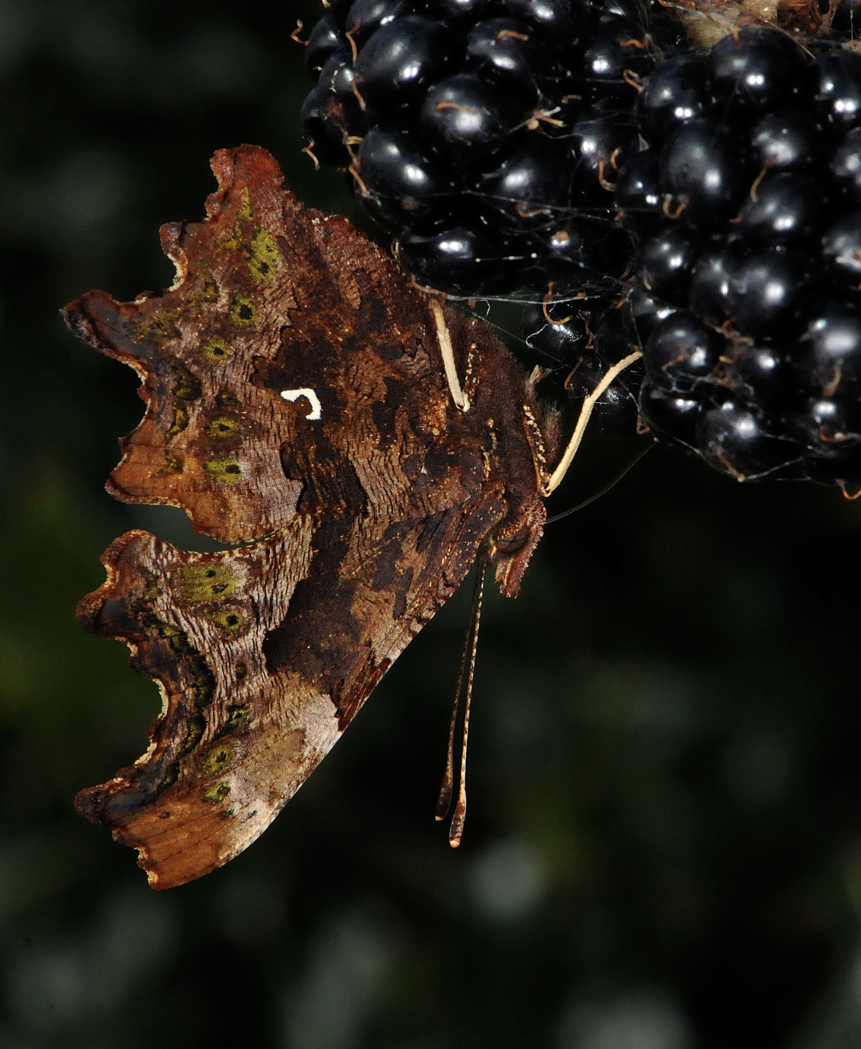 Comma by Paul.Taylor
