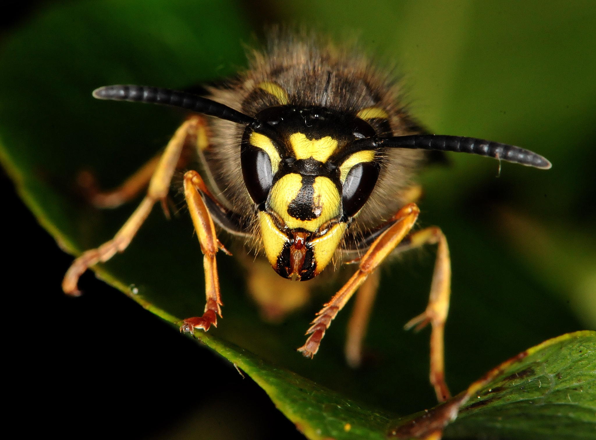 Wasp3 by Paul.Taylor
