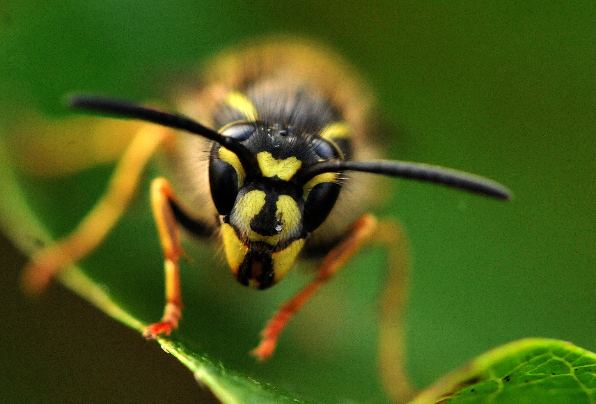 Wasp4 (last one:) by Paul.Taylor
