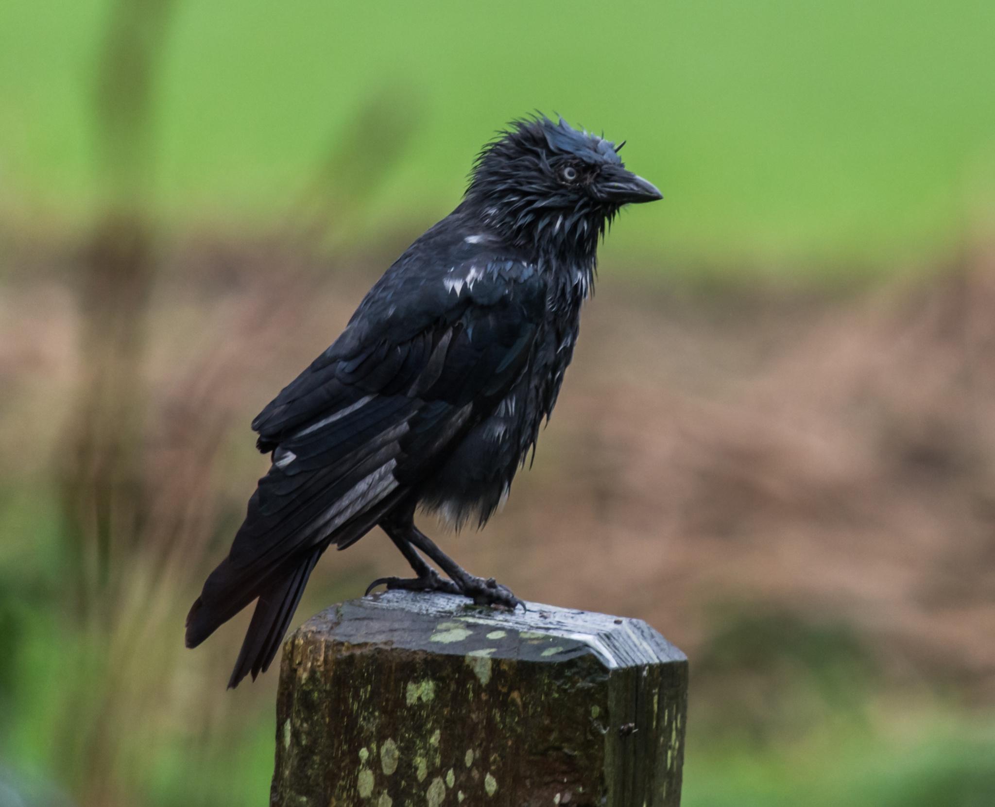 Wet Bird by gill.kennett.9