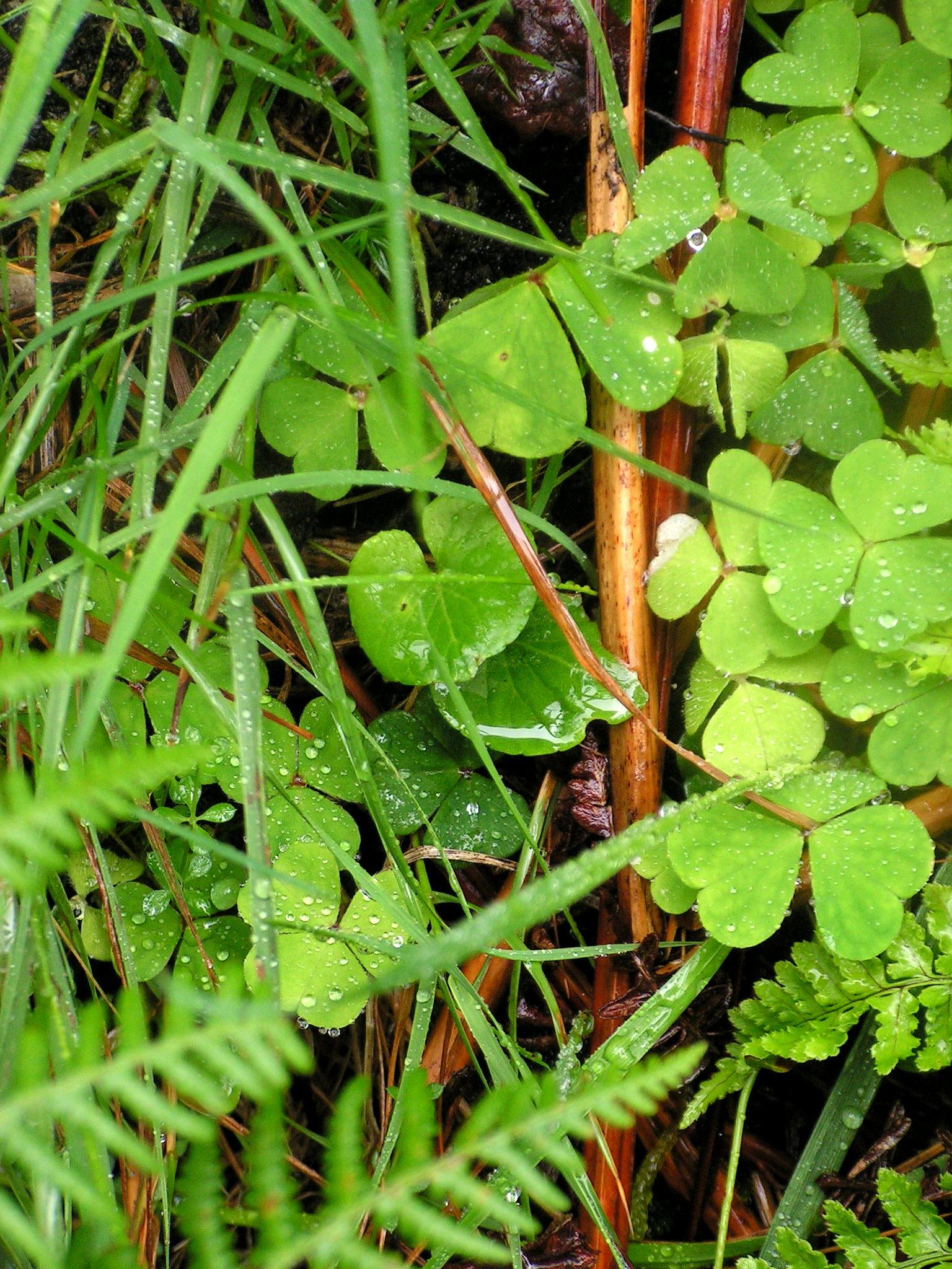 Photo in Nature #shamrock #path #waterfall #county donegal #wet #dew #caputured drops