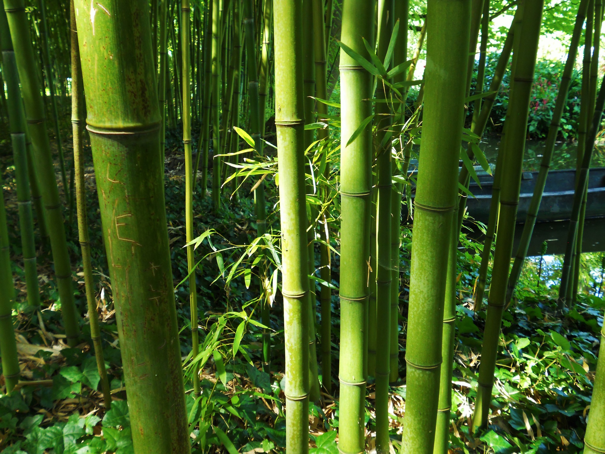 Boat through bamboo by andythrossell