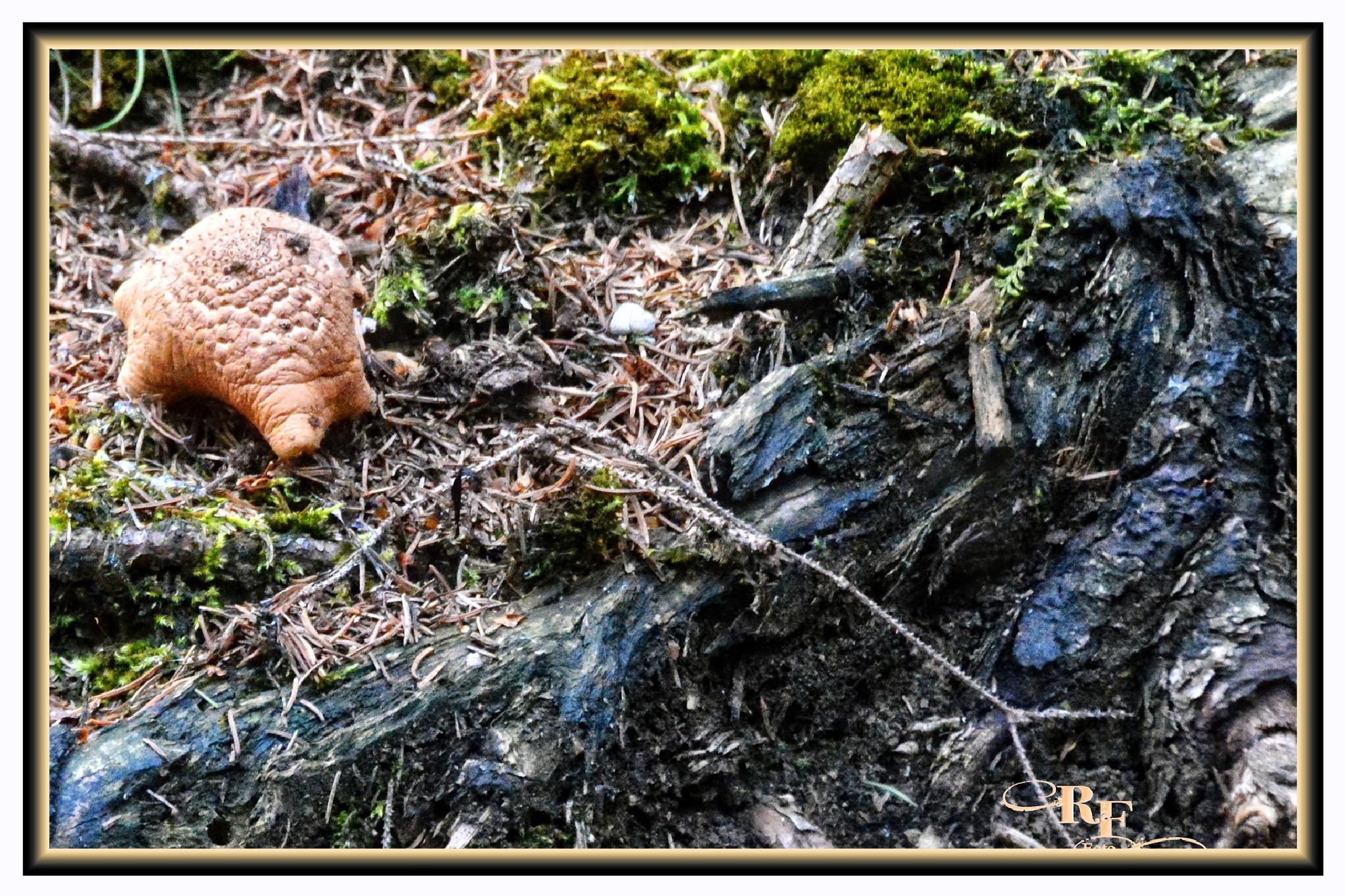 Was ist das? Ein Gürteltier oder ein Pilz? by RoPaFue