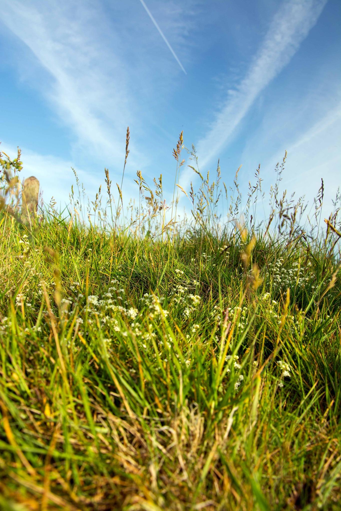 meadow flowers by ianjck