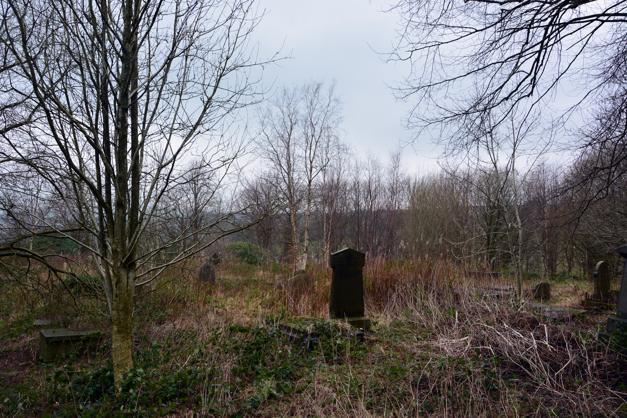 Old graveyard by ianjck