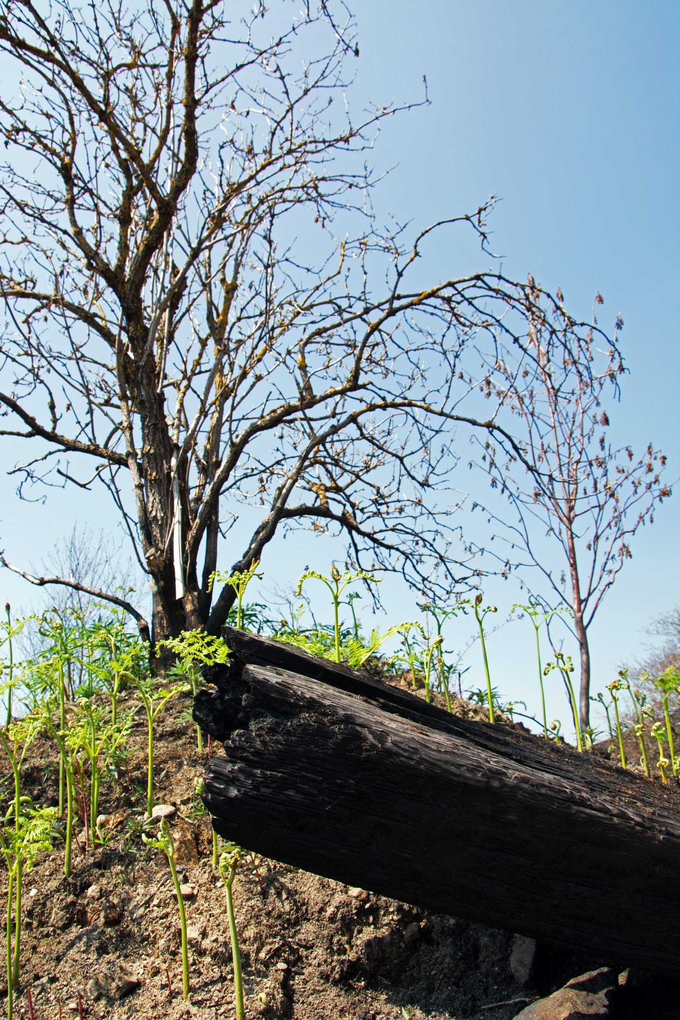Photo in Landscape #fire #burnt #shoots #landscape