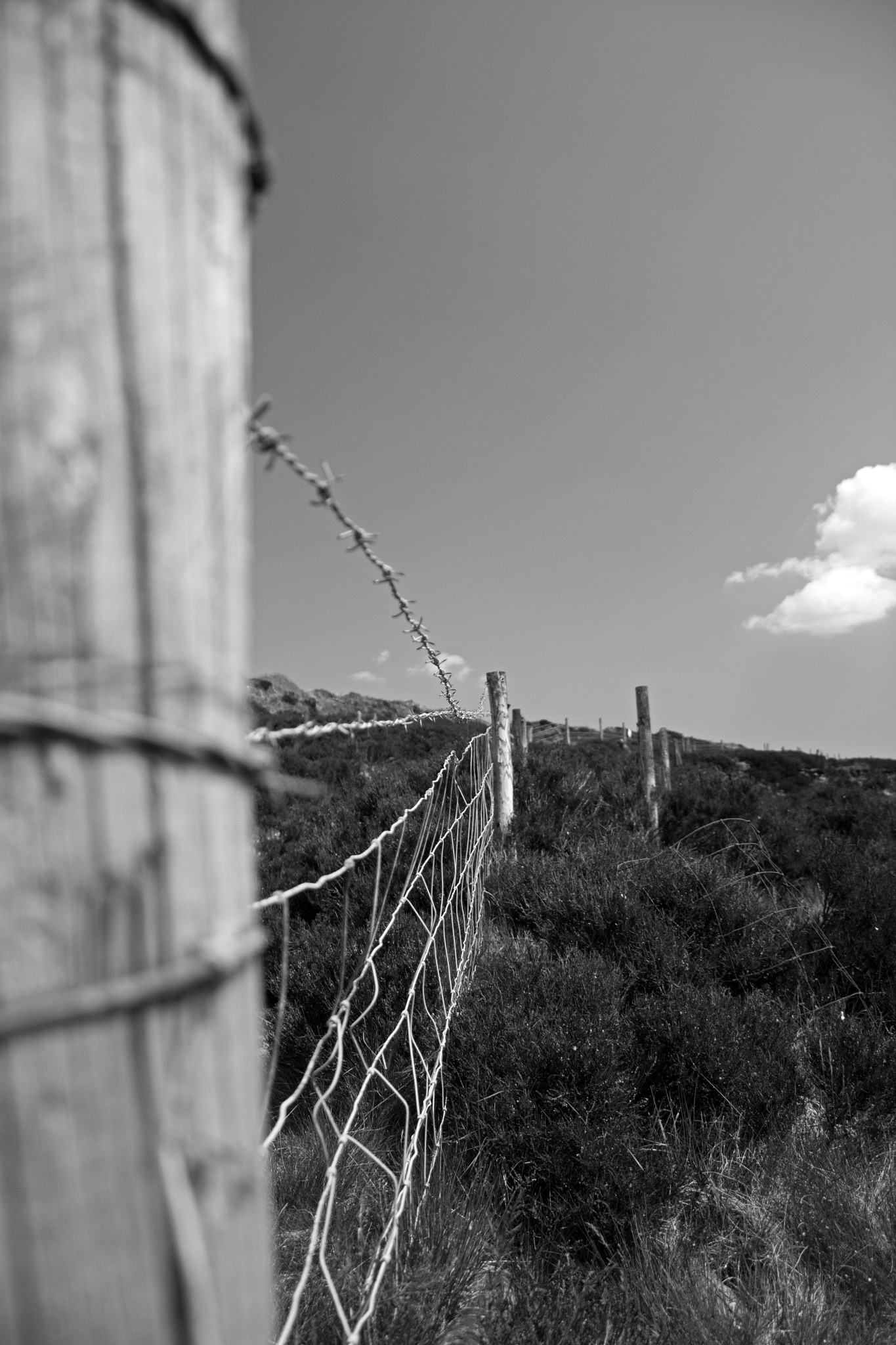 Wood and wire by ianjck
