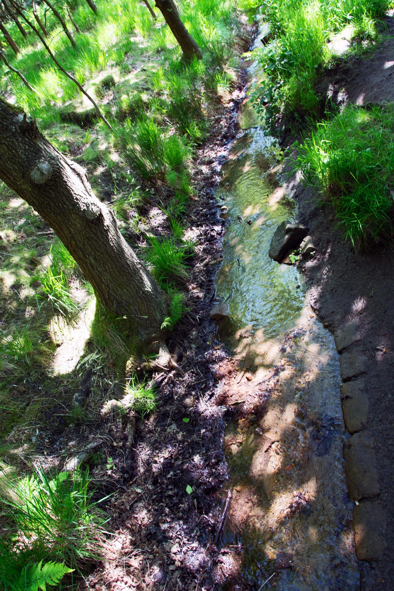 Photo in Landscape #brook #water #shade #landscape