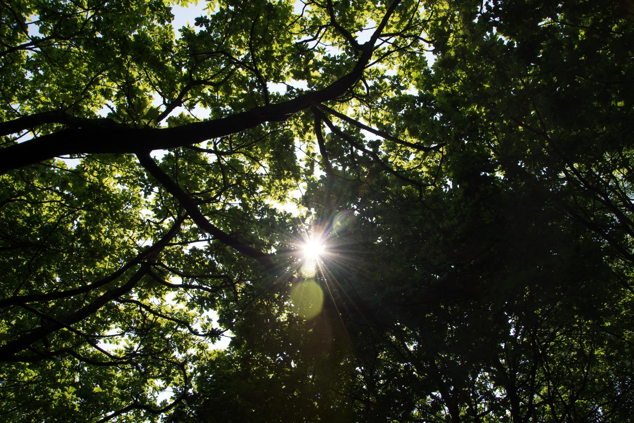 Photo in Landscape #sun #trees #landscape