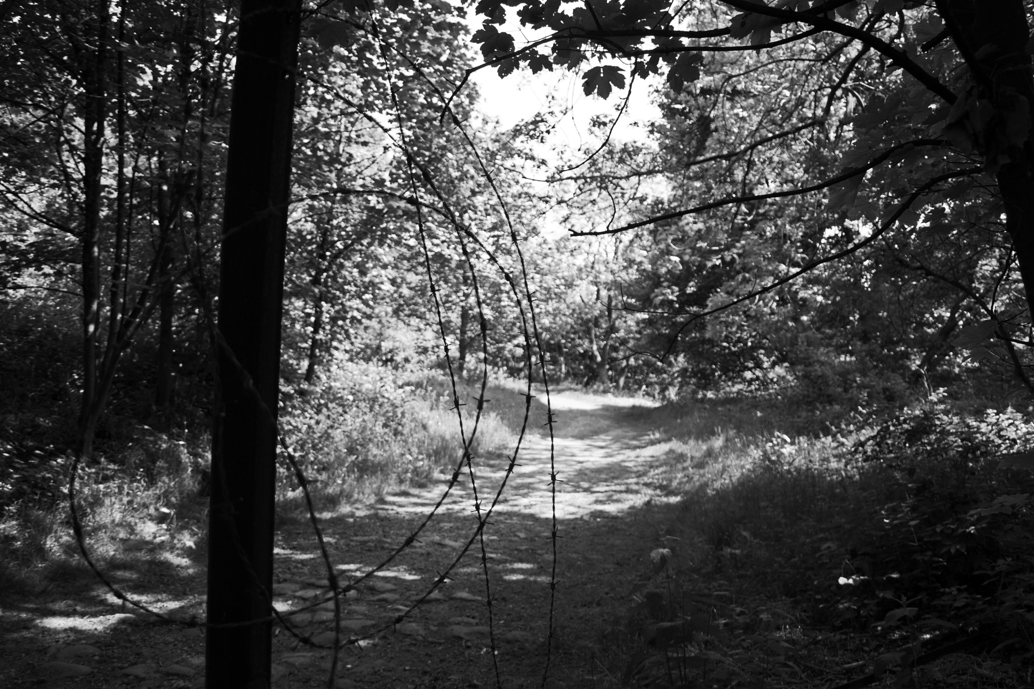 wire in the woods by ianjck