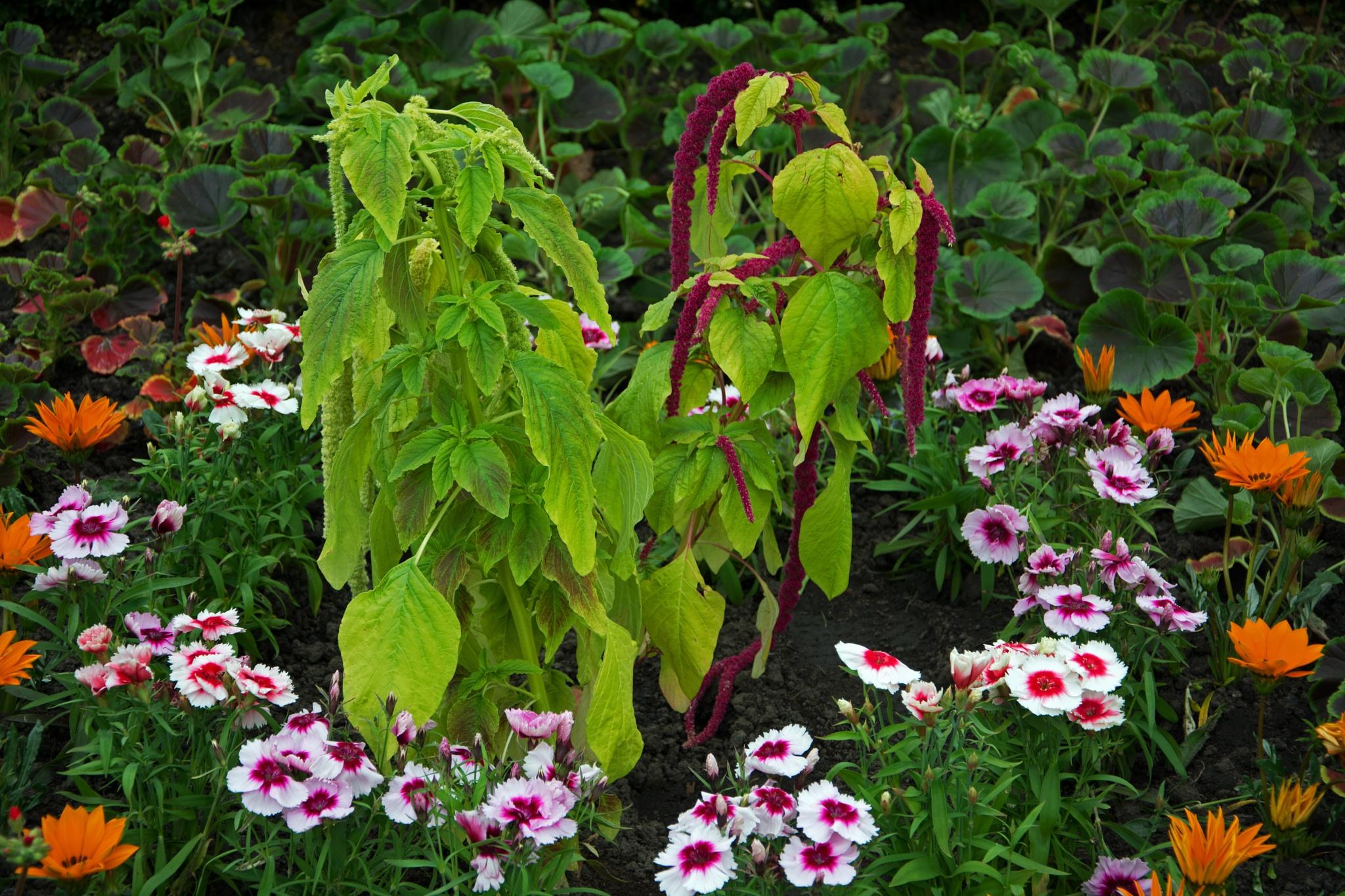 summer flowers by ianjck