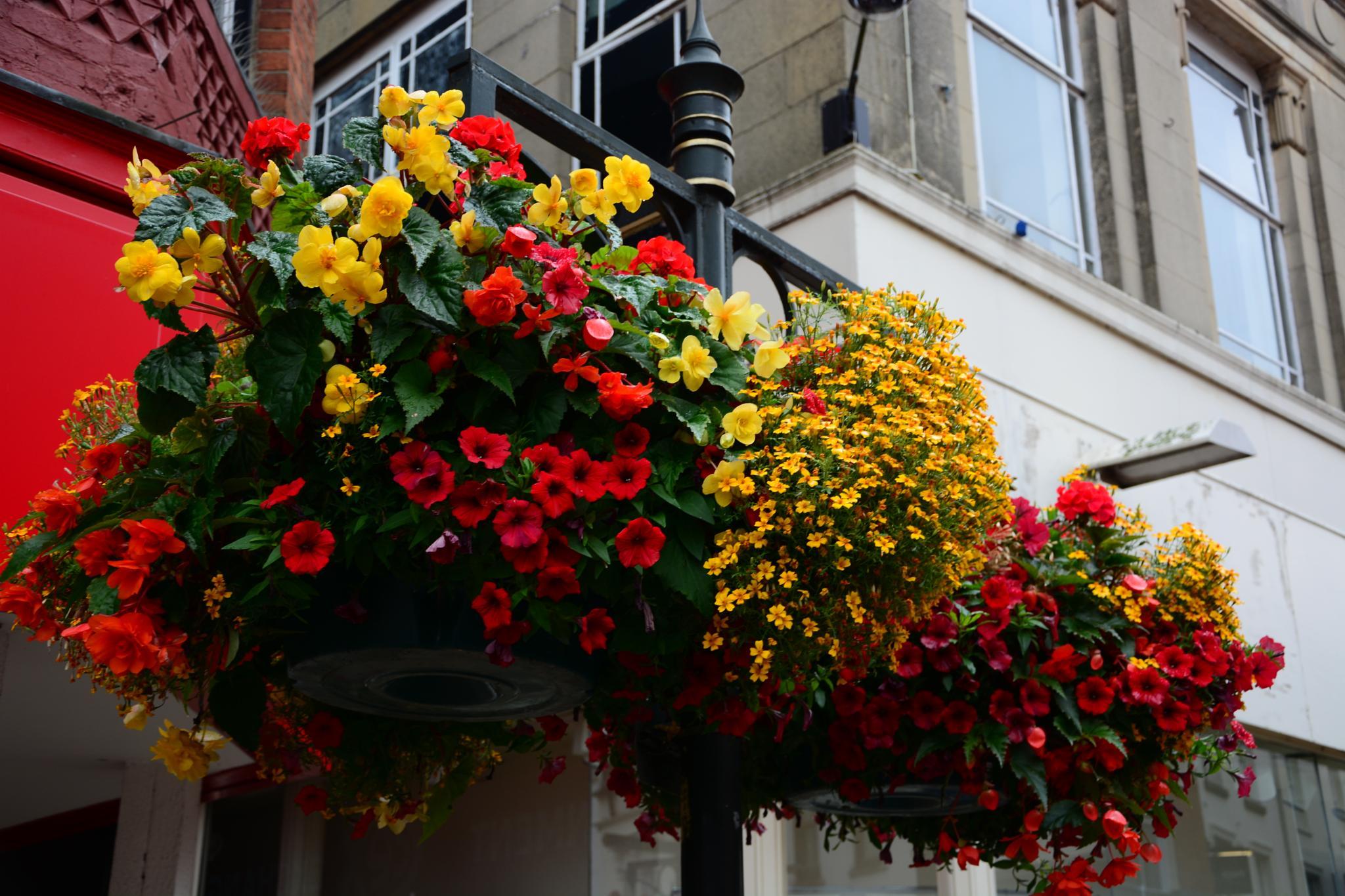 Flowers by ianjck