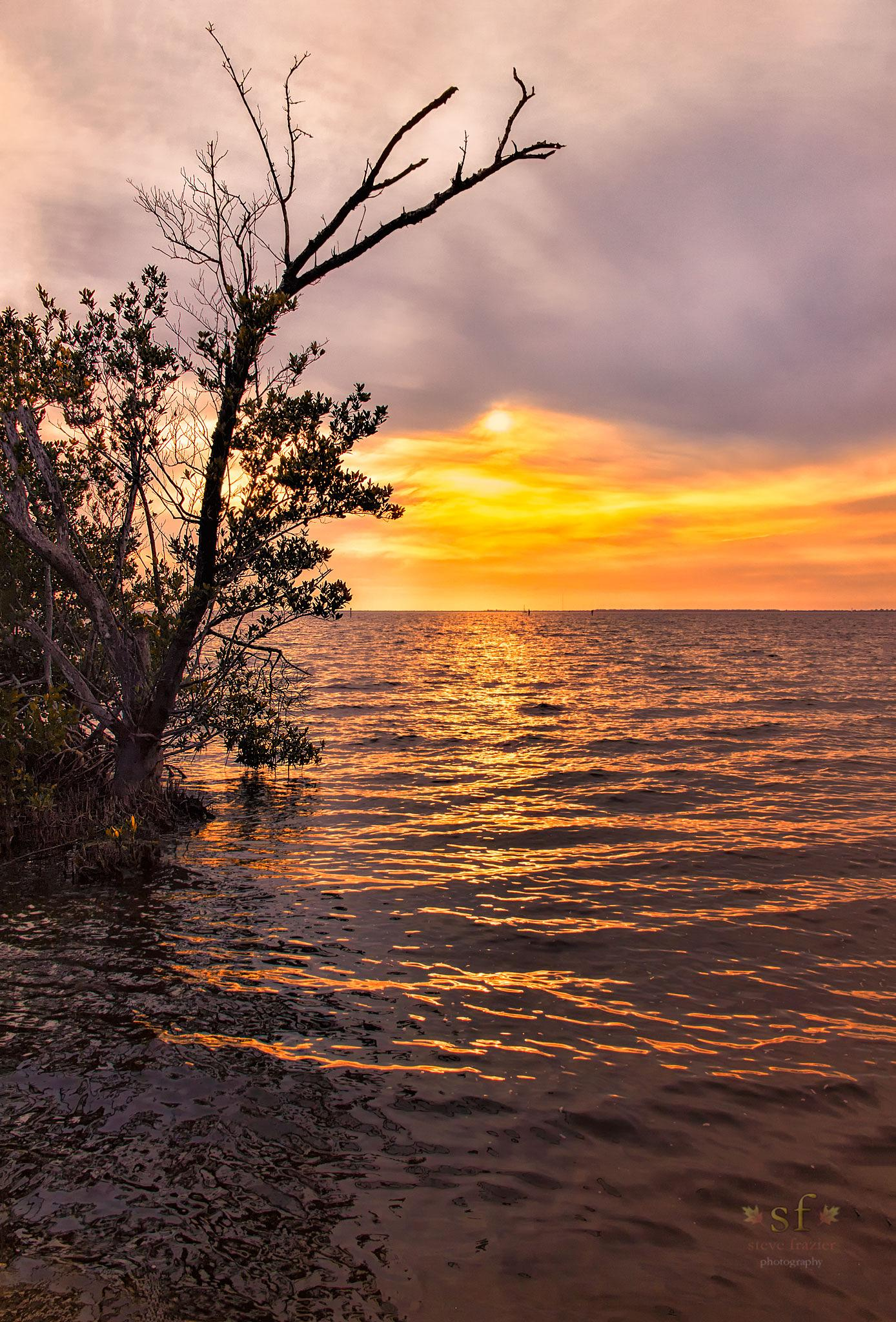 Deep in the Mangroves at Sunset by Steve Frazier