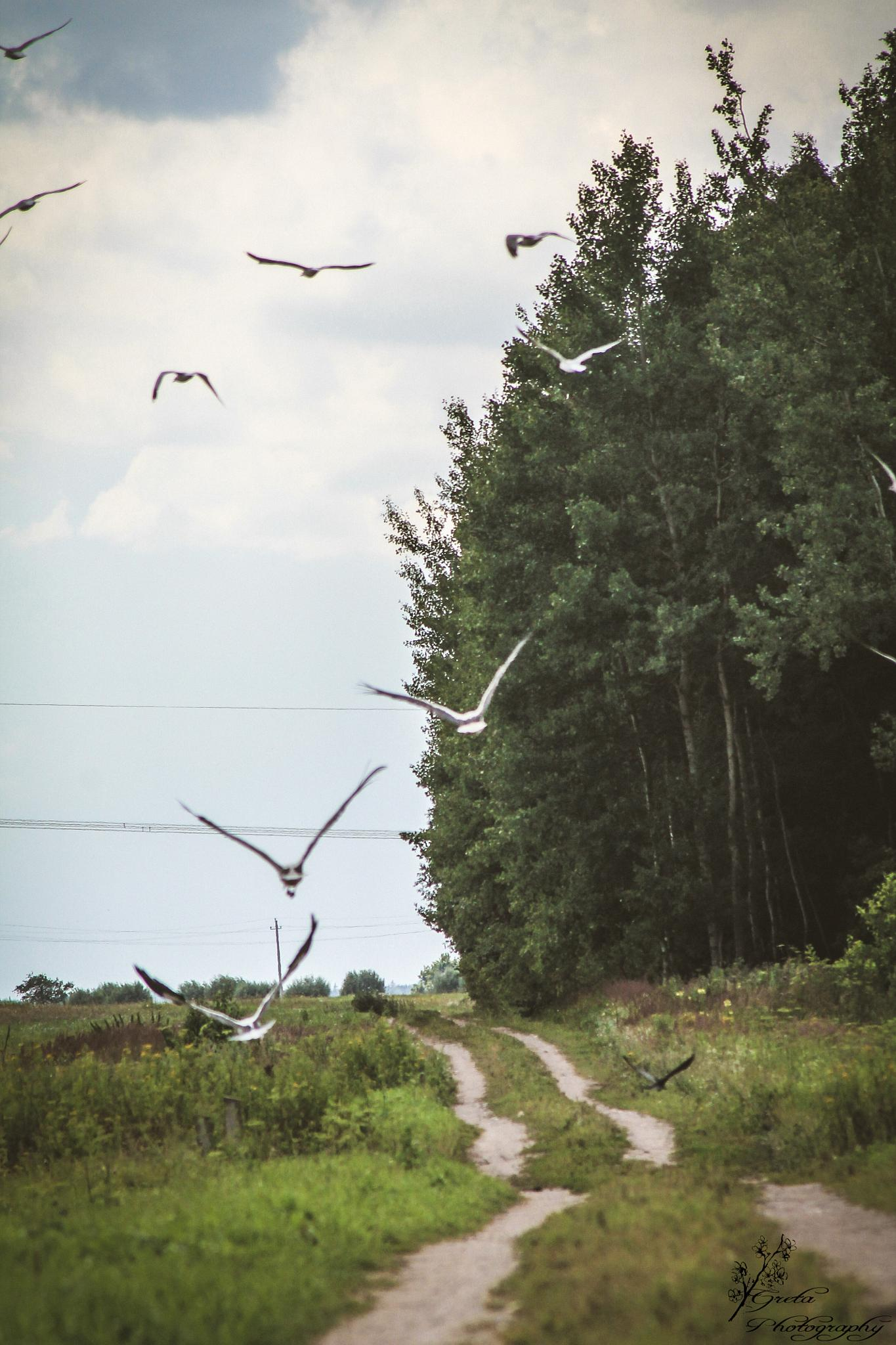 Nature around me  by IIGretaII