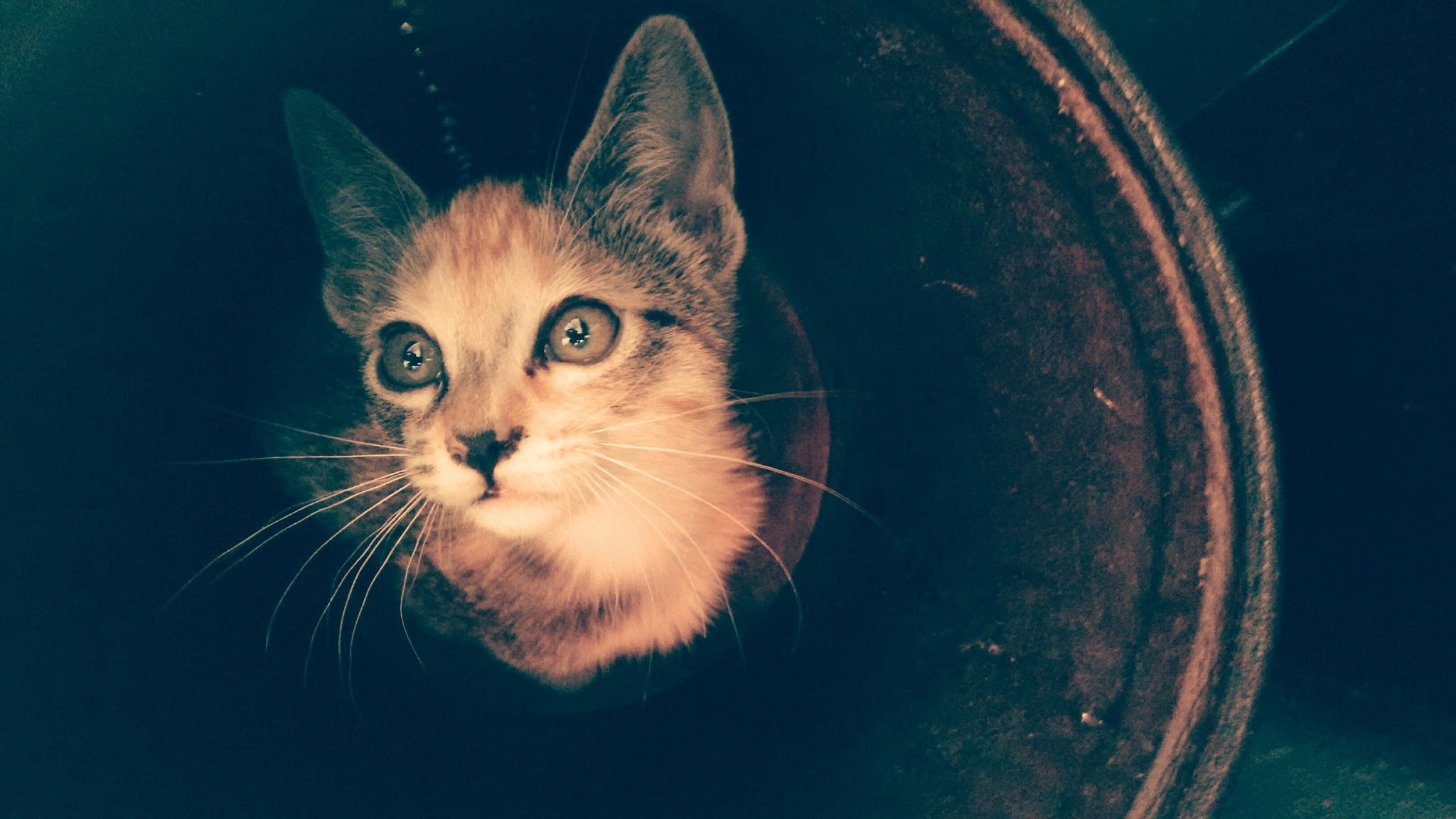 cat by dsg fotoestudio