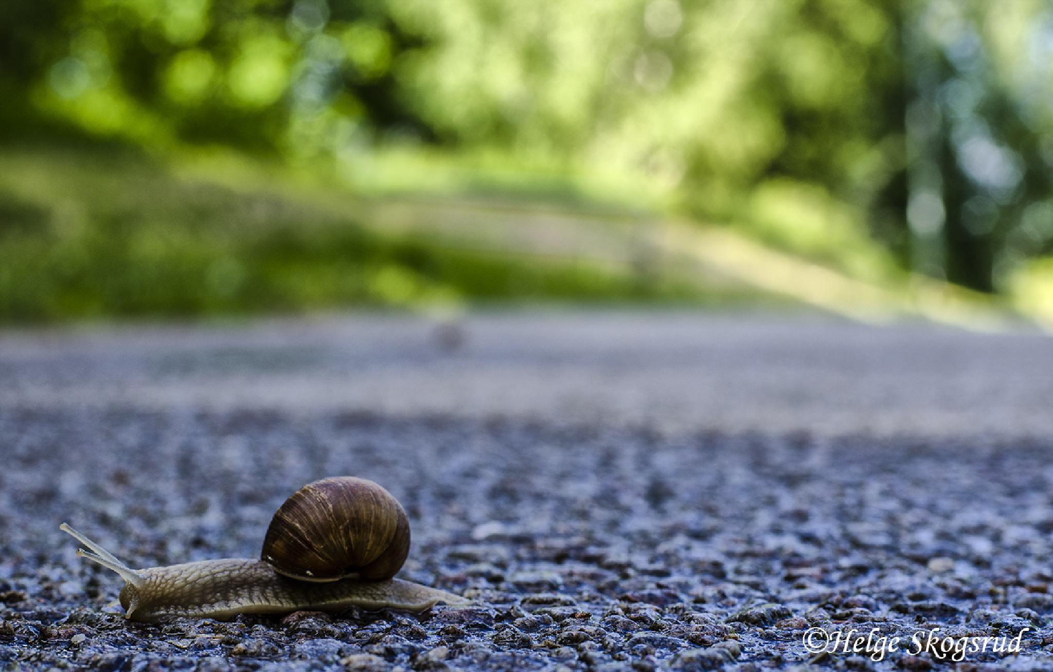 Photo in Animal #snail #nature #sweden #scandinavia