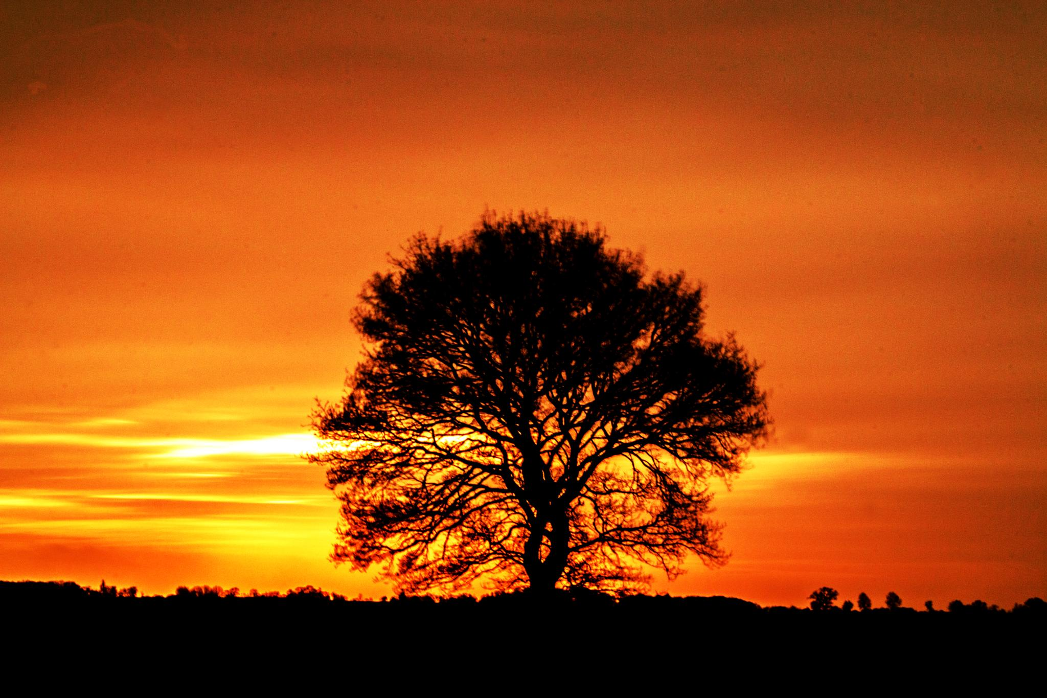 Photo in Landscape #sunset #tree #nature #red