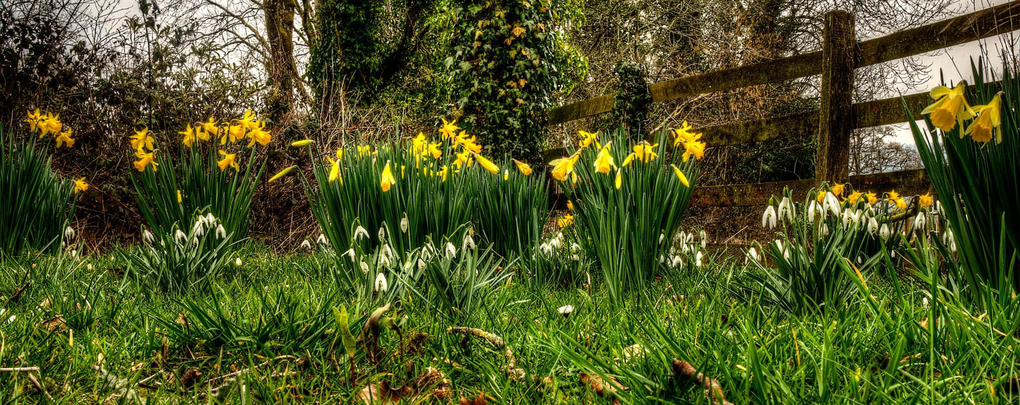 Spring Garden by mike.lloyd.125