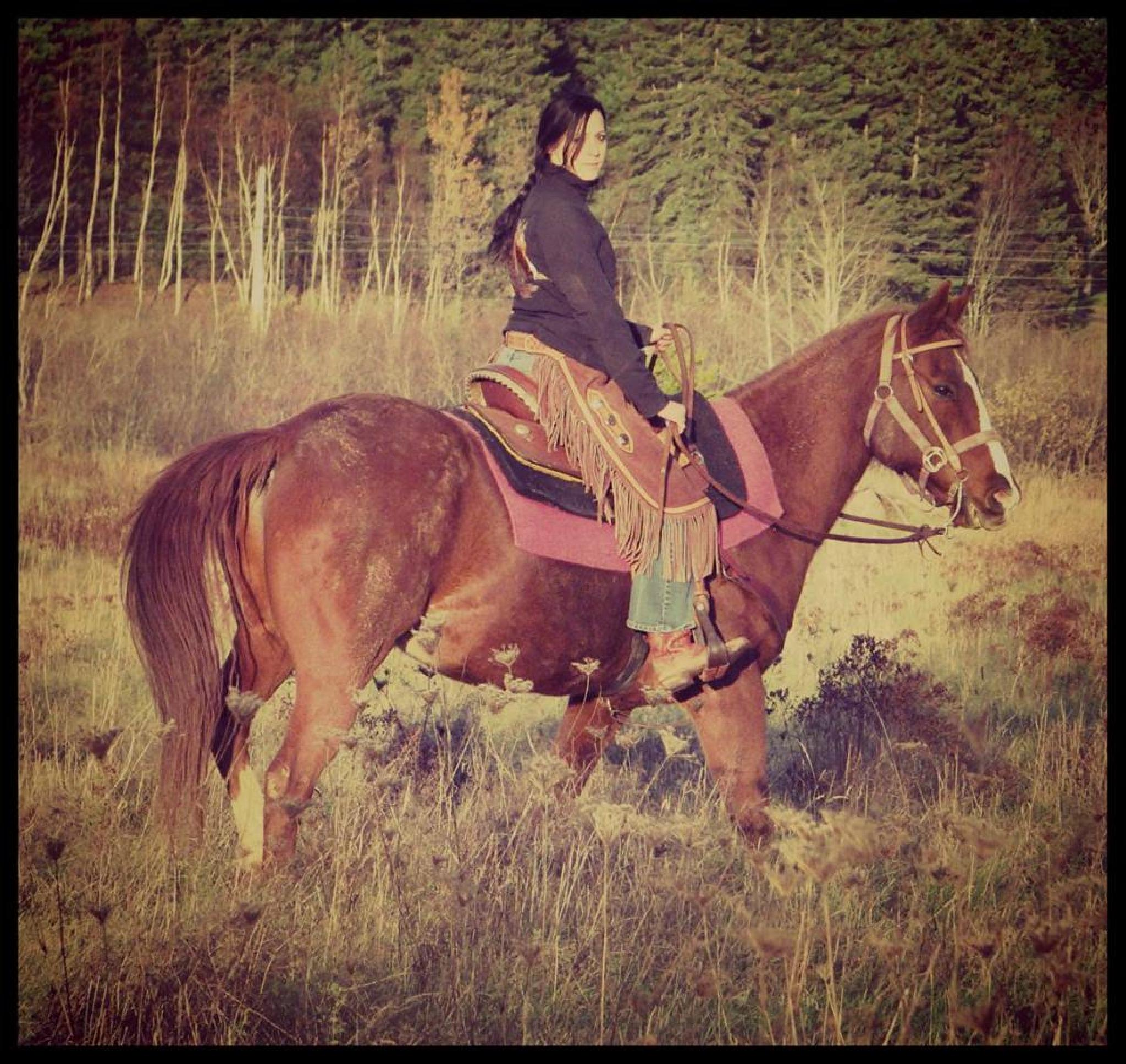Photo in Animal #horse #pet