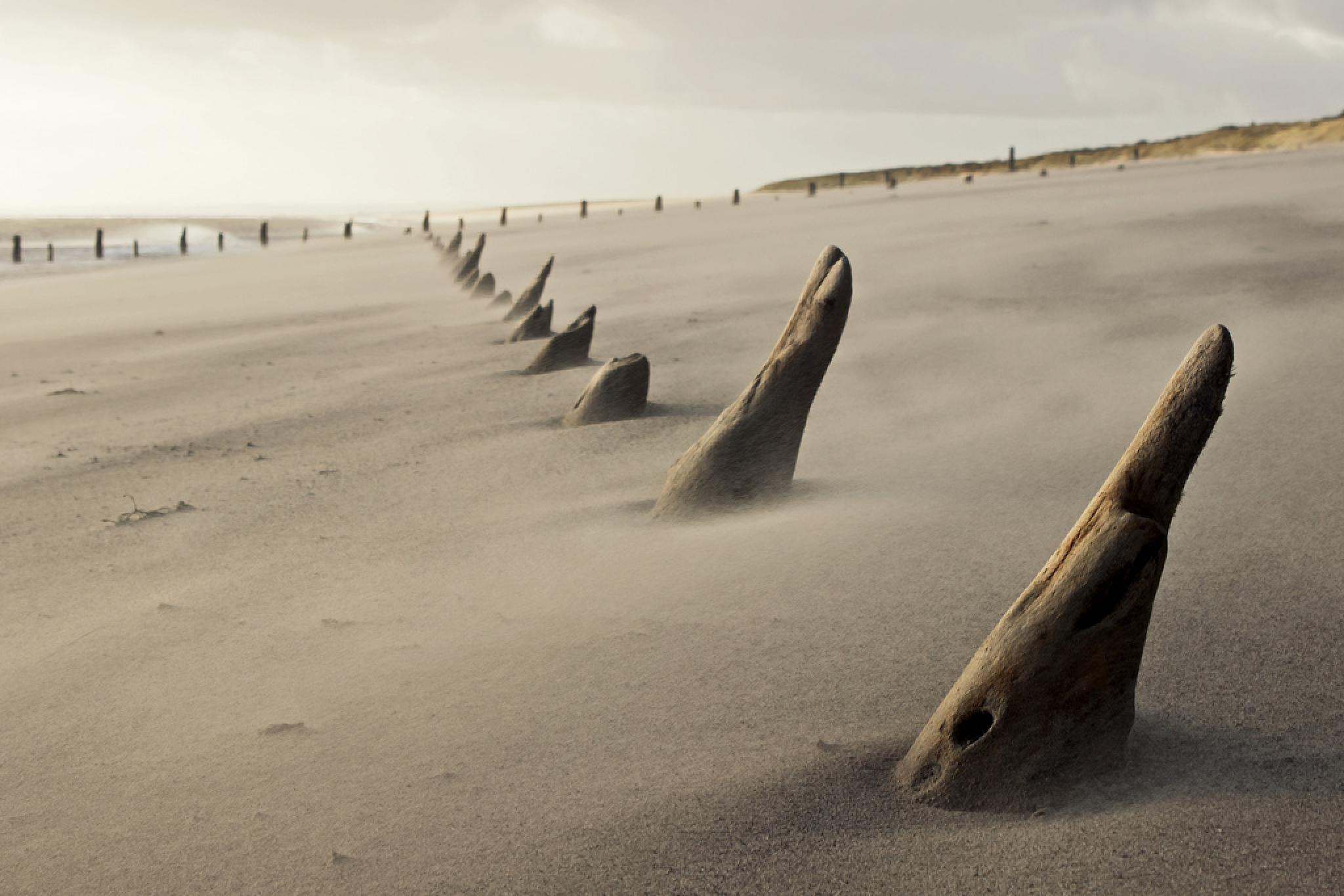 Photo in Sea and Sand #spurn point #east yorkshire #groynes
