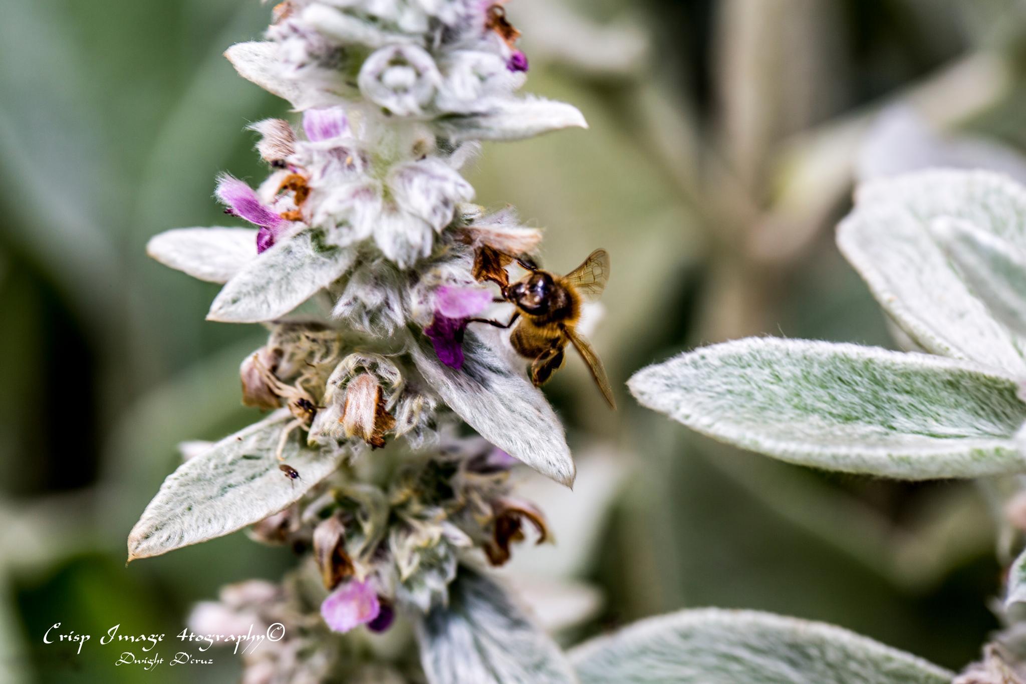 Bee Positive by Dwight D'Cruz