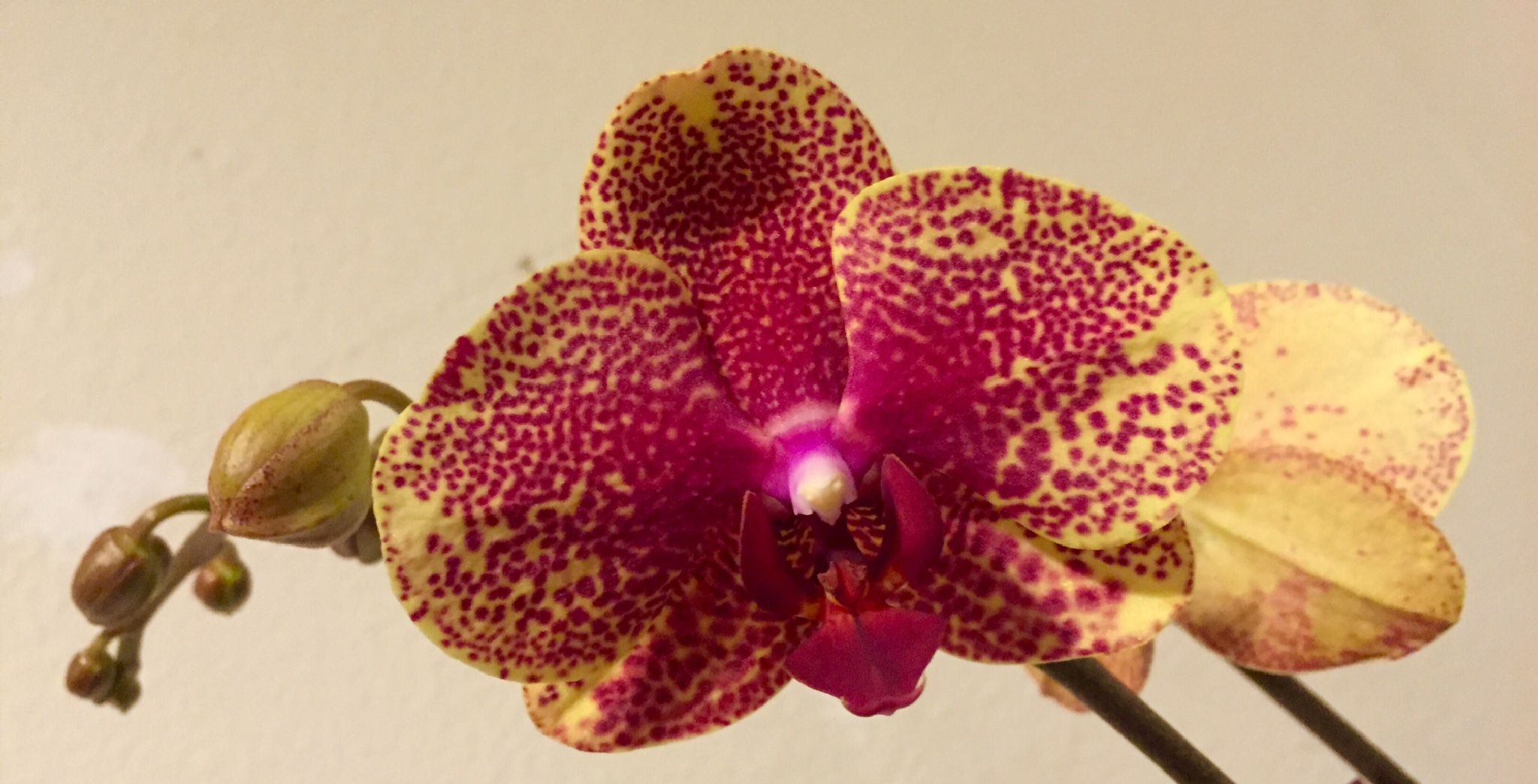 Beautiful orchid by tessa33