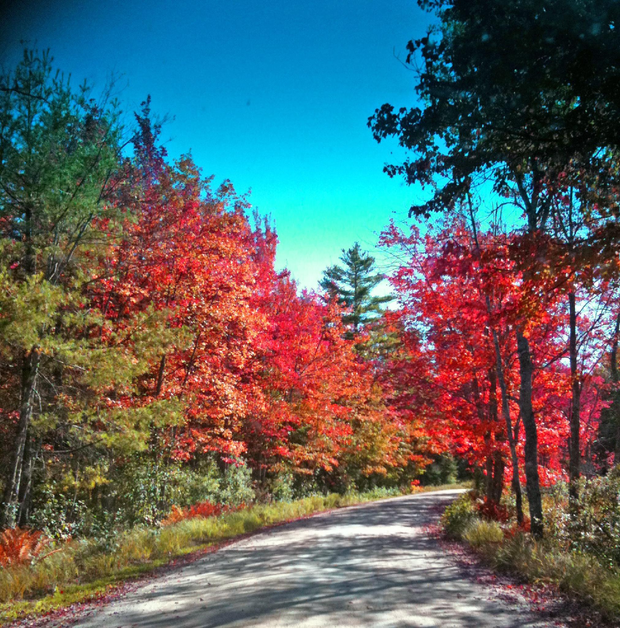 Road home by SassieKatt