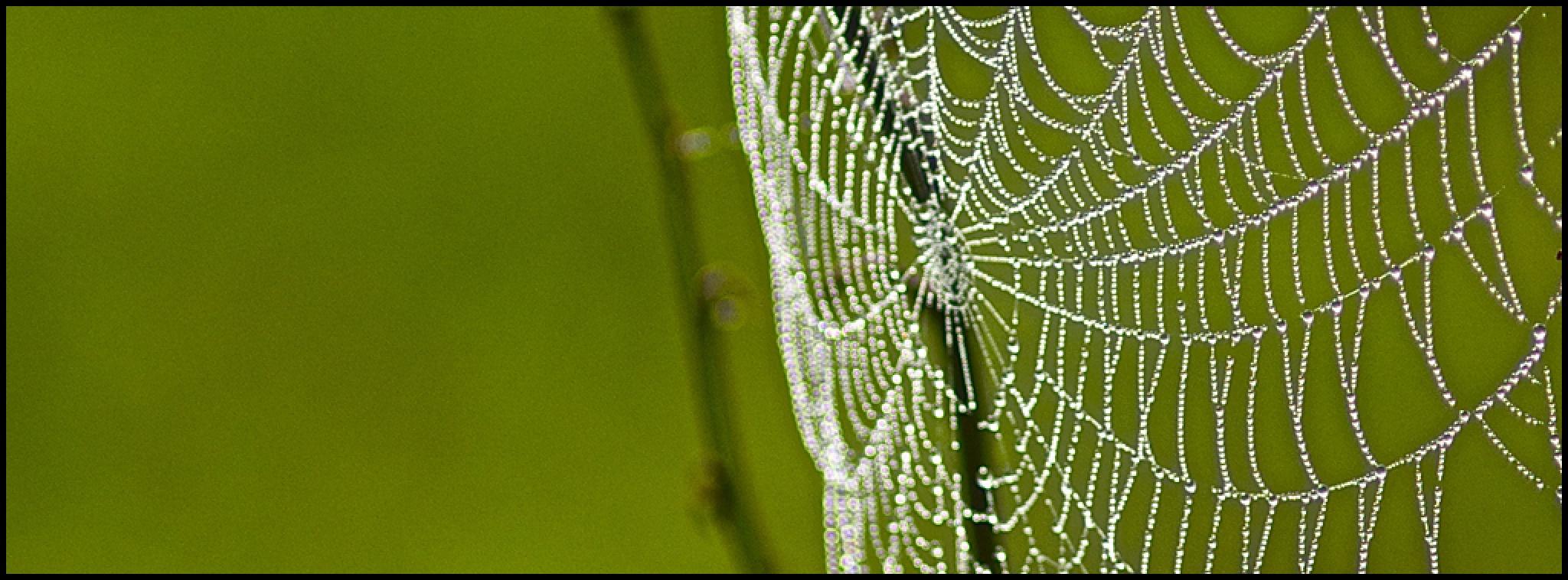 Wet Web by Fay R. Dildine, Jr.
