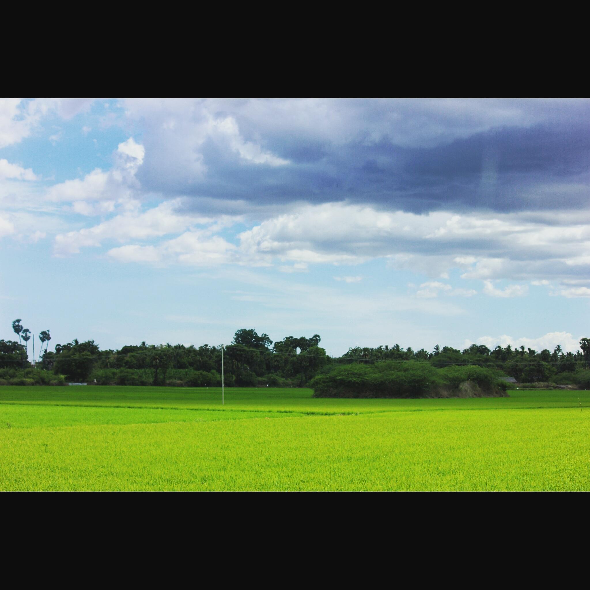 Farming scenes  by Raji Selvakumar
