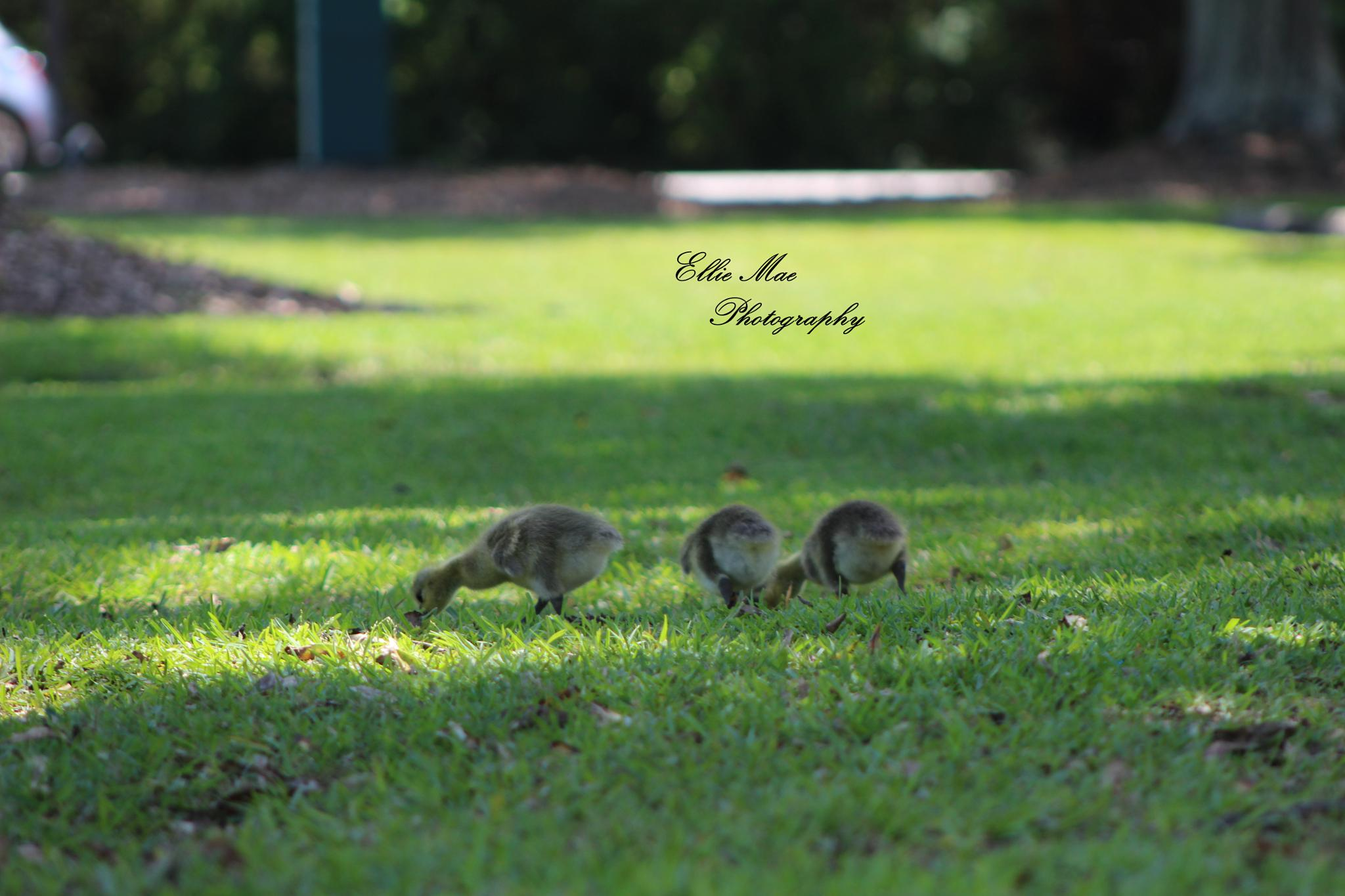 Babies Exploring by EHPhotography