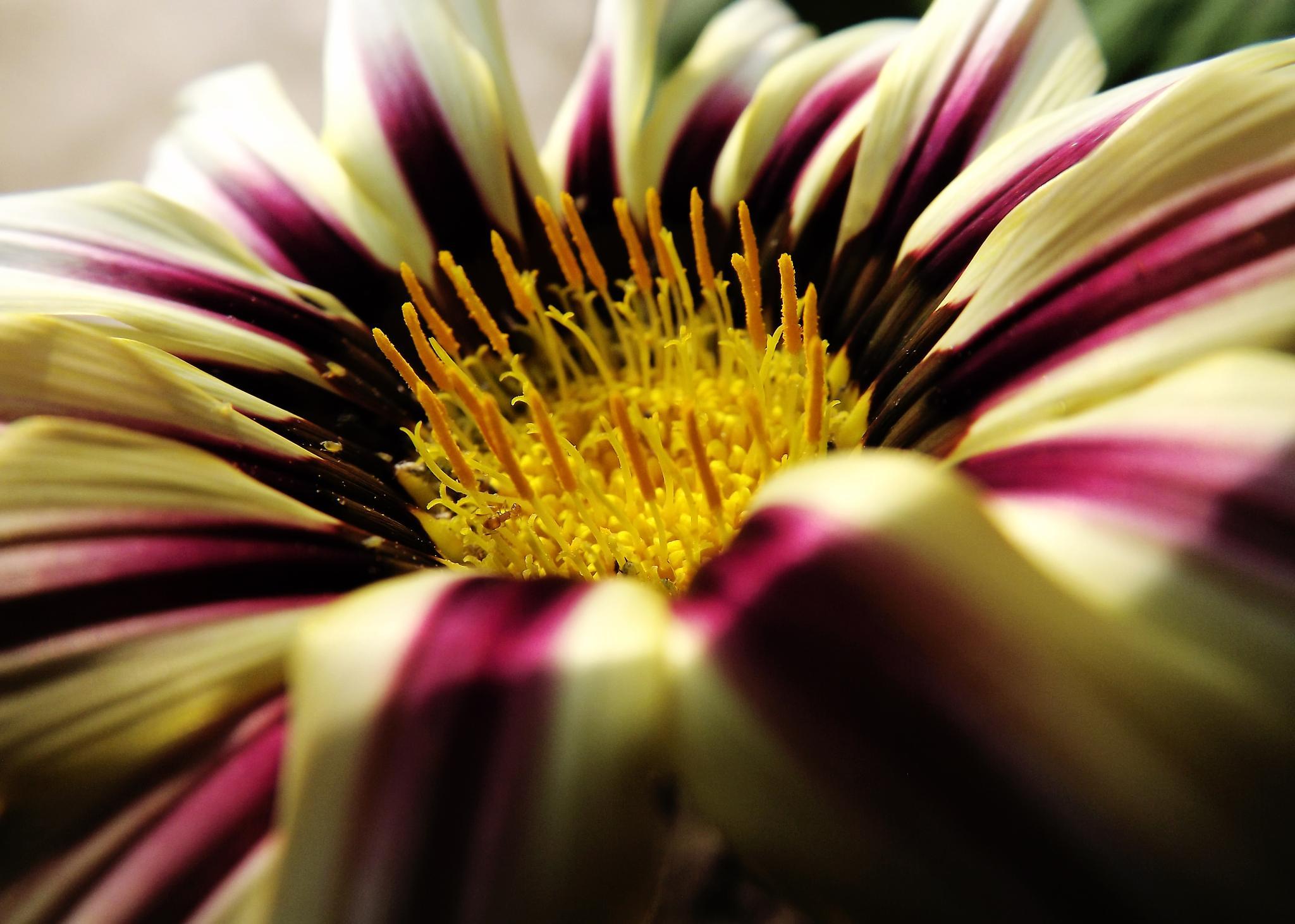 Season Flower by ARINDAM MUKHERJEE