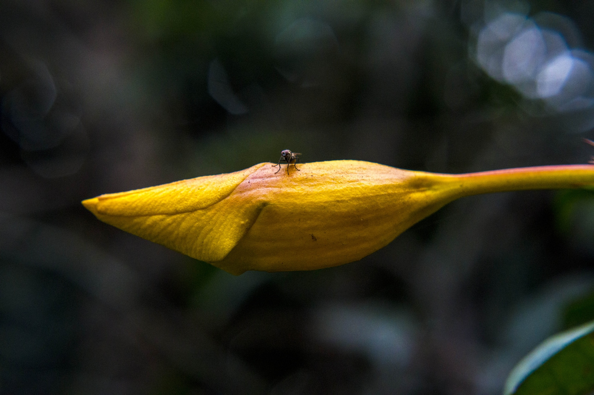 the fly by BearMan