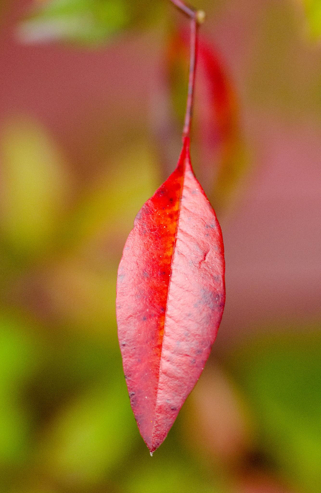 leaf by BearMan