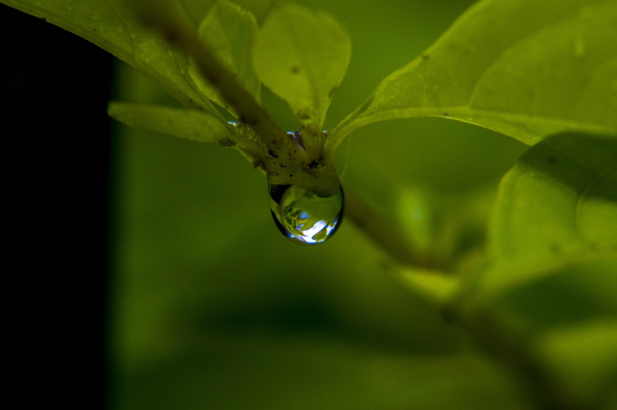 Love the rain by BearMan