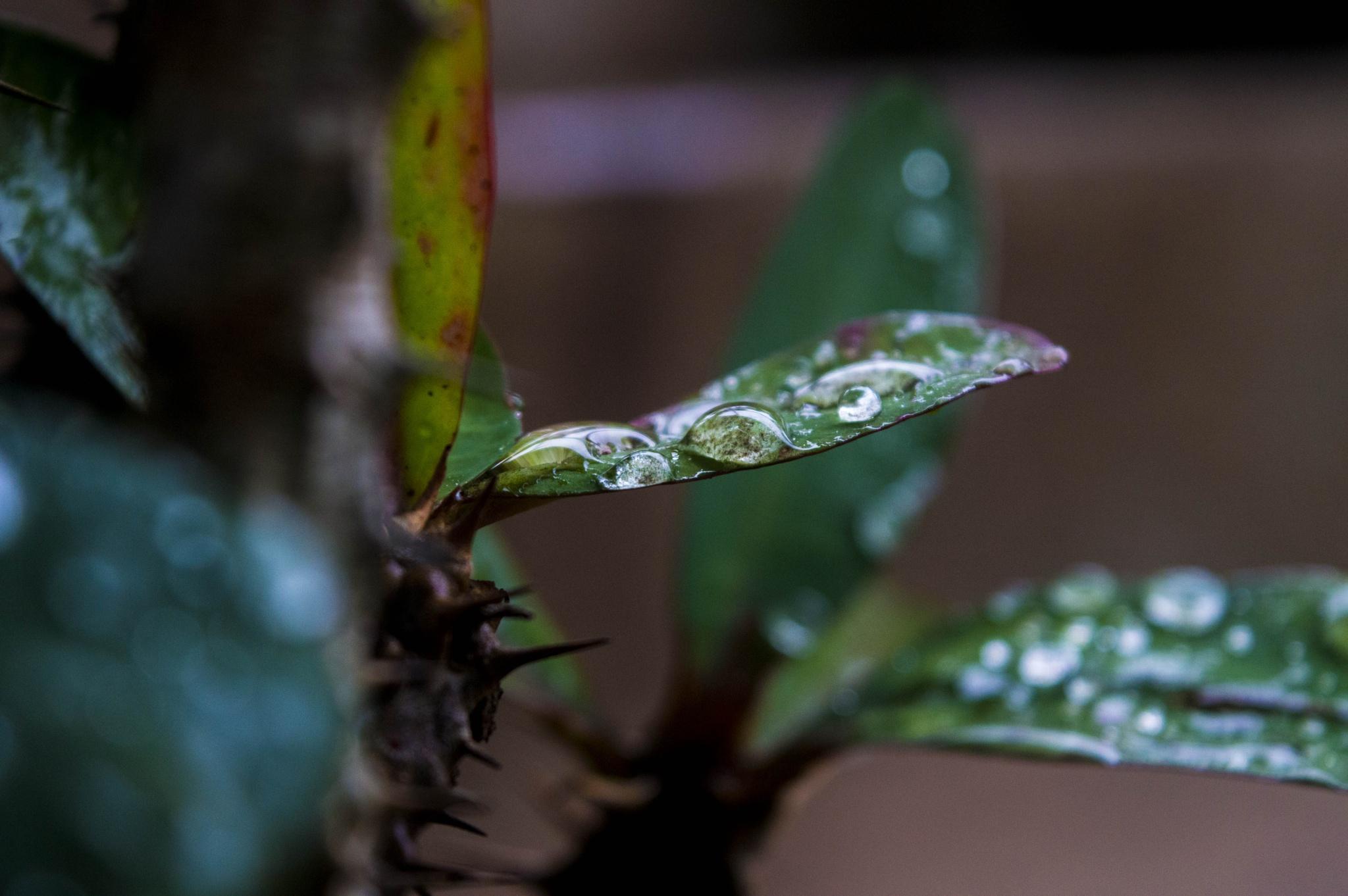rain by BearMan