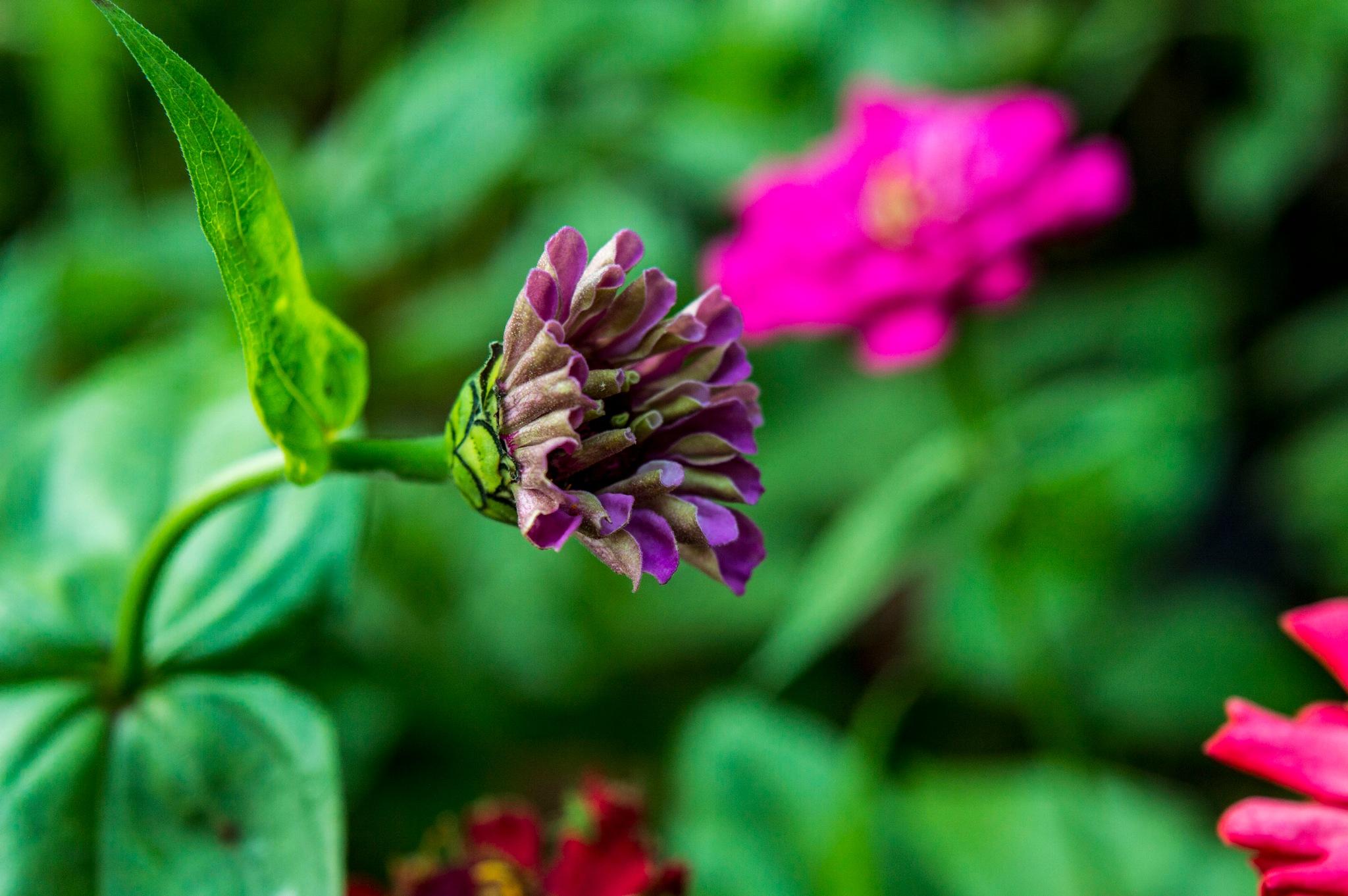 square flower by BearMan