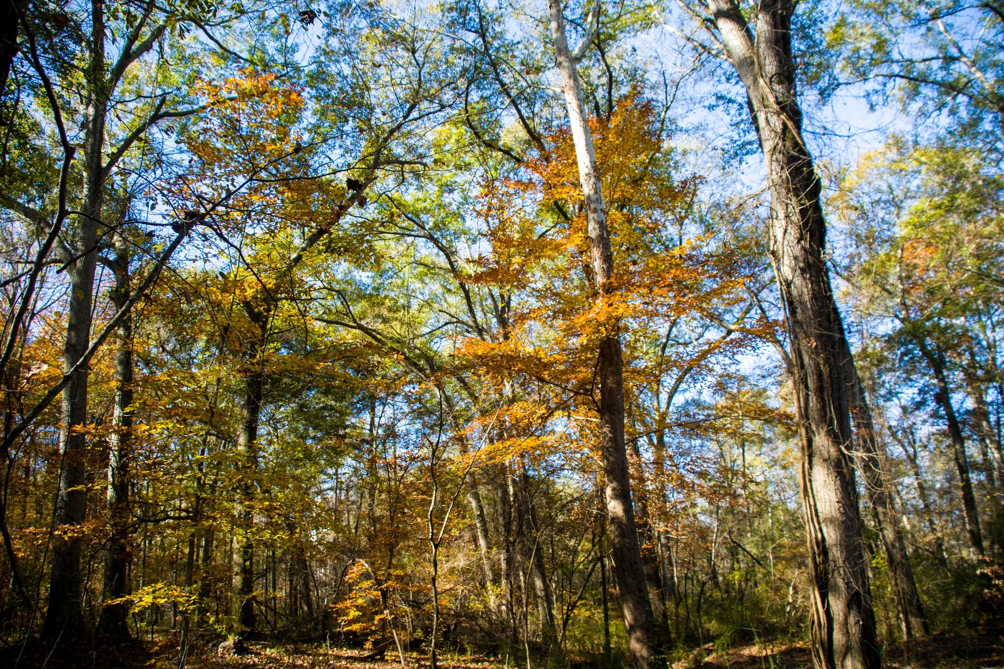 fall colors by BearMan